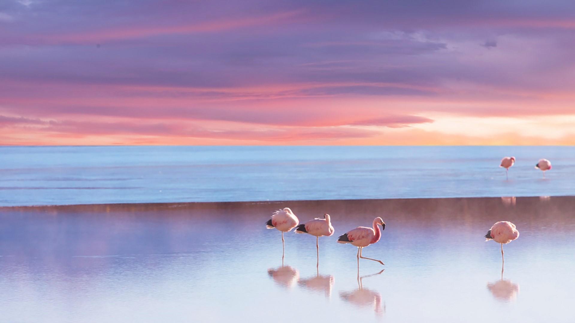 Animal Beach Bird Flamingo Horizon Ocean Sea Sunset 1920x1080