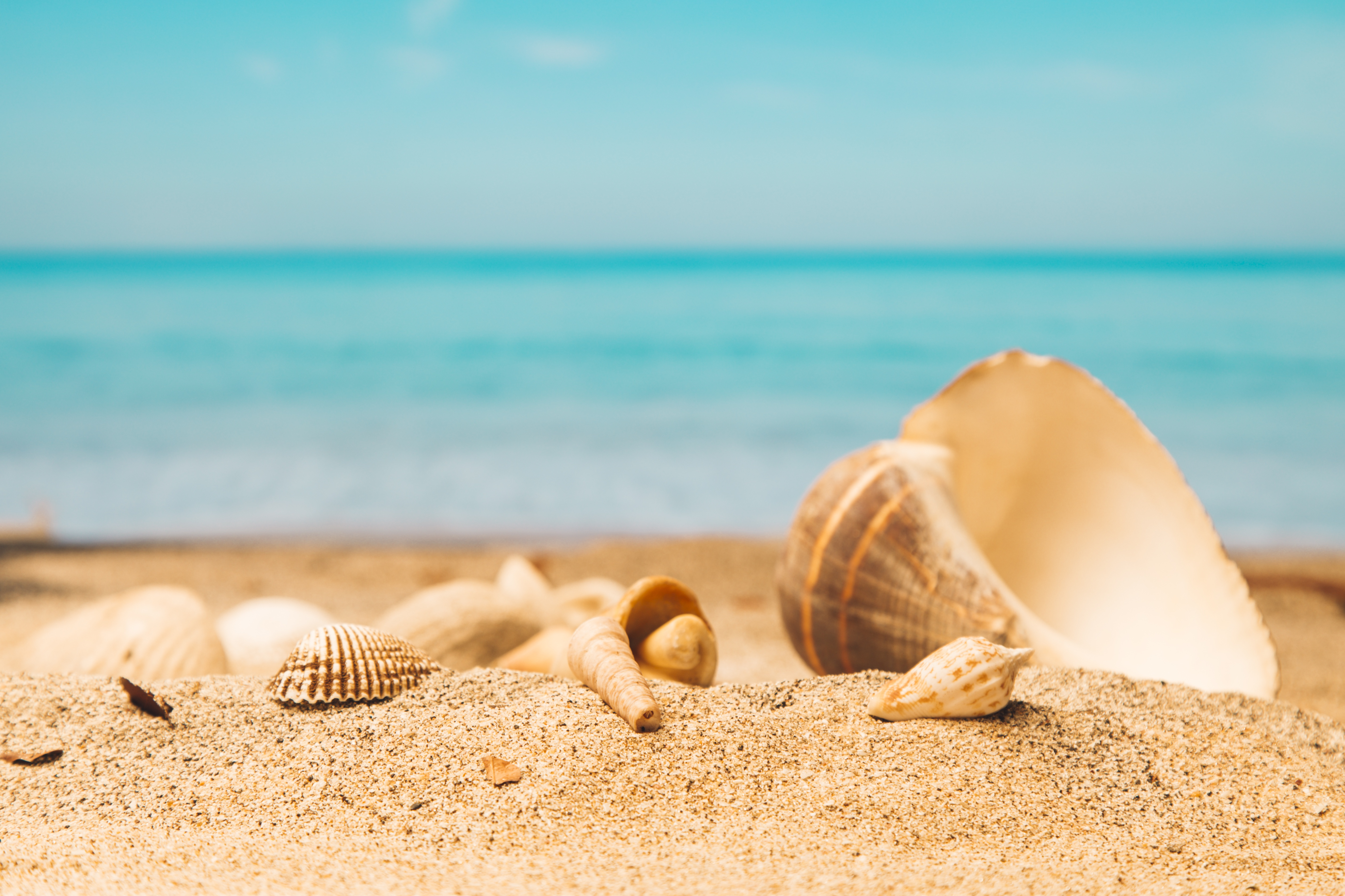 Depth Of Field Nature Sand Shell 5041x3361