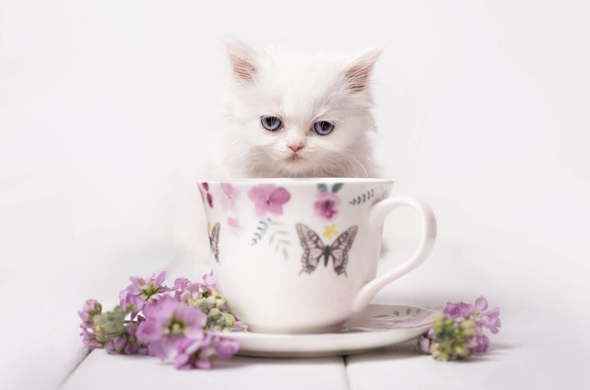 Cat Cup Pet Stare 1920x1269