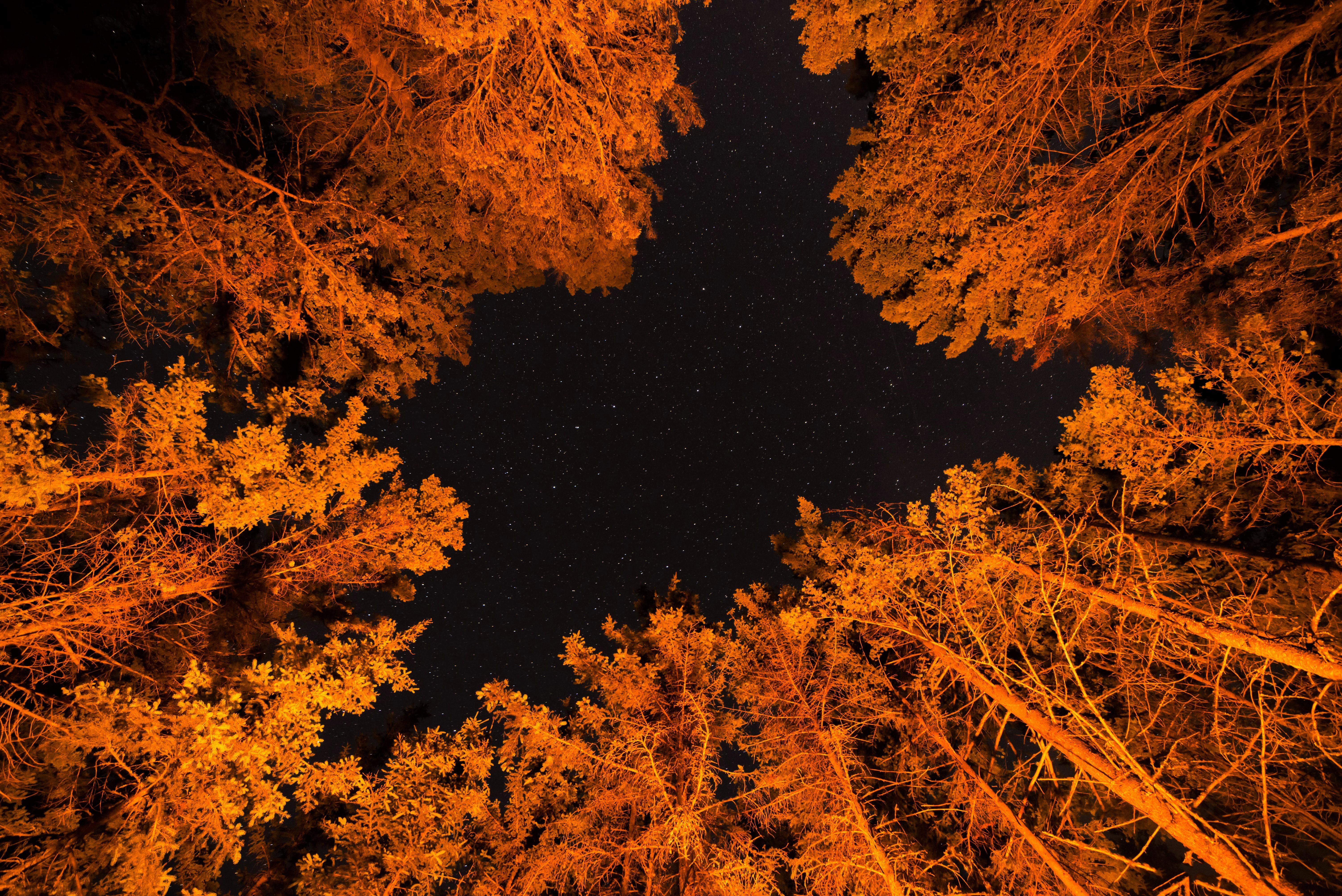 Canopy Earth Fall Foliage Forest Night Stars Tree Orange Color 6016x4016