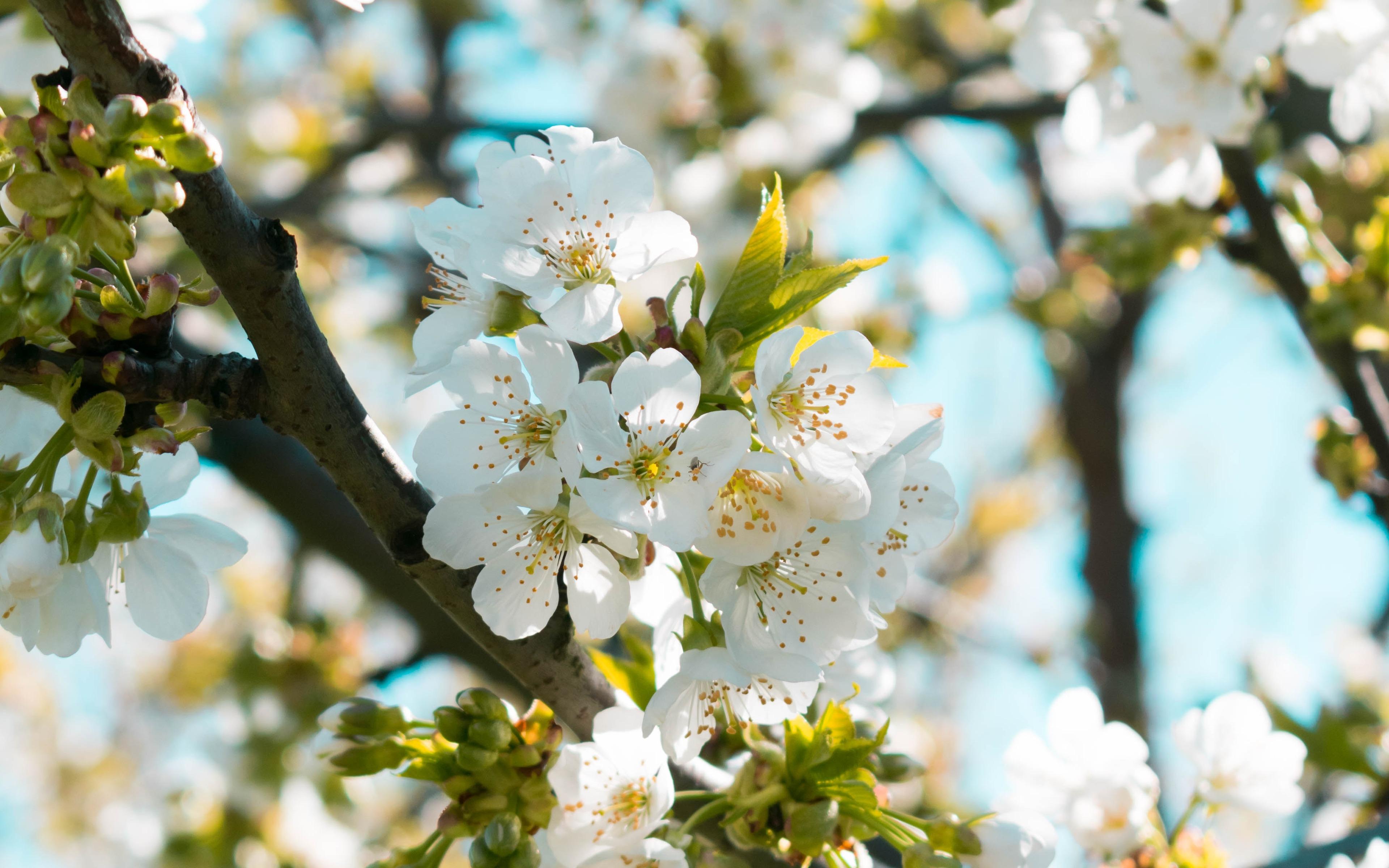 Flower Spring White Flower 3840x2400