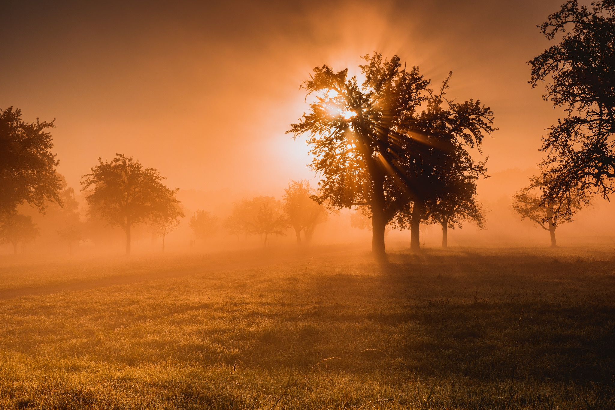 Grass Nature Sunbeam Sunset Tree 2048x1367
