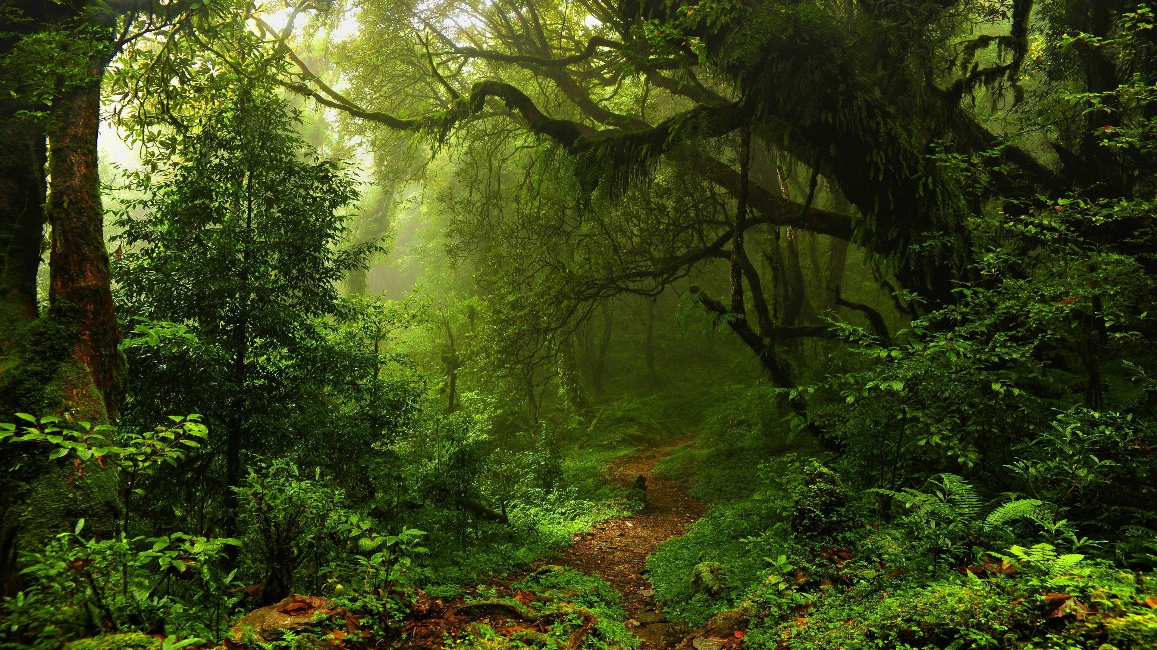 Forest Greenery Path Sunshine 3840x2160