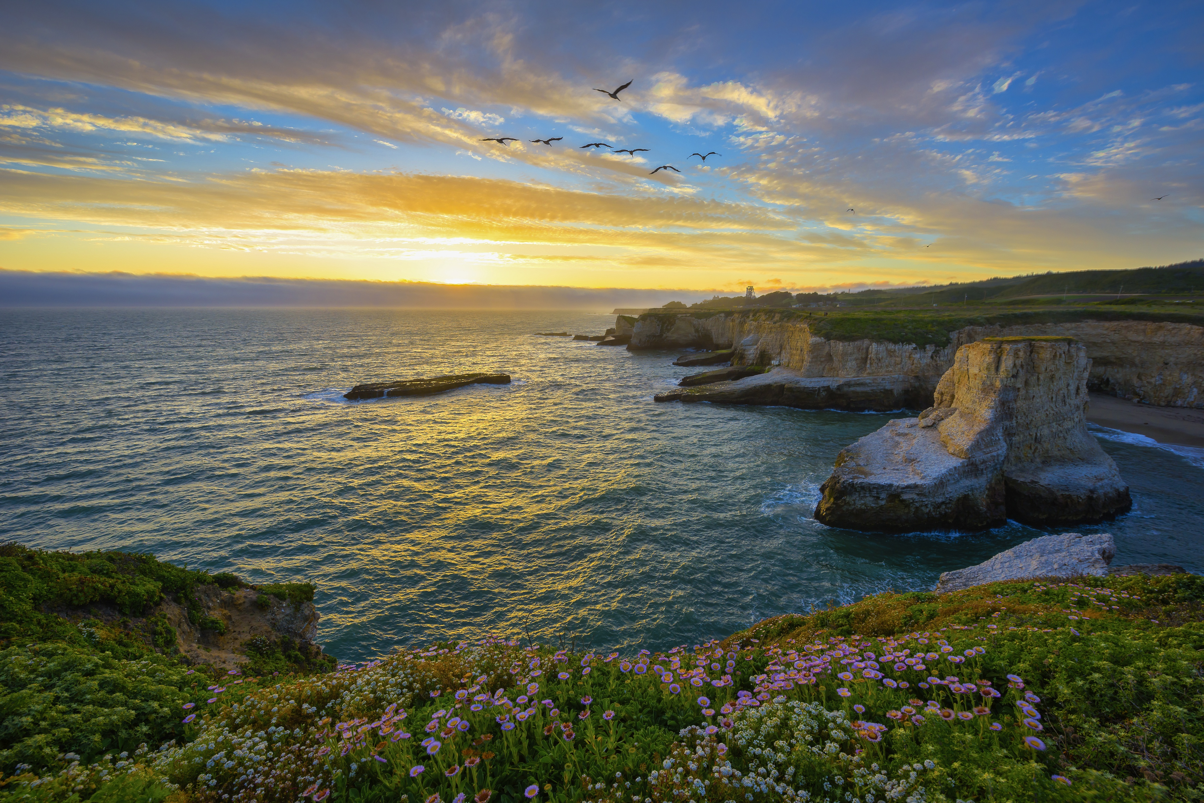 Bird California Coastline Flower Ocean Rock Santa Cruz Sunset Usa 4096x2734