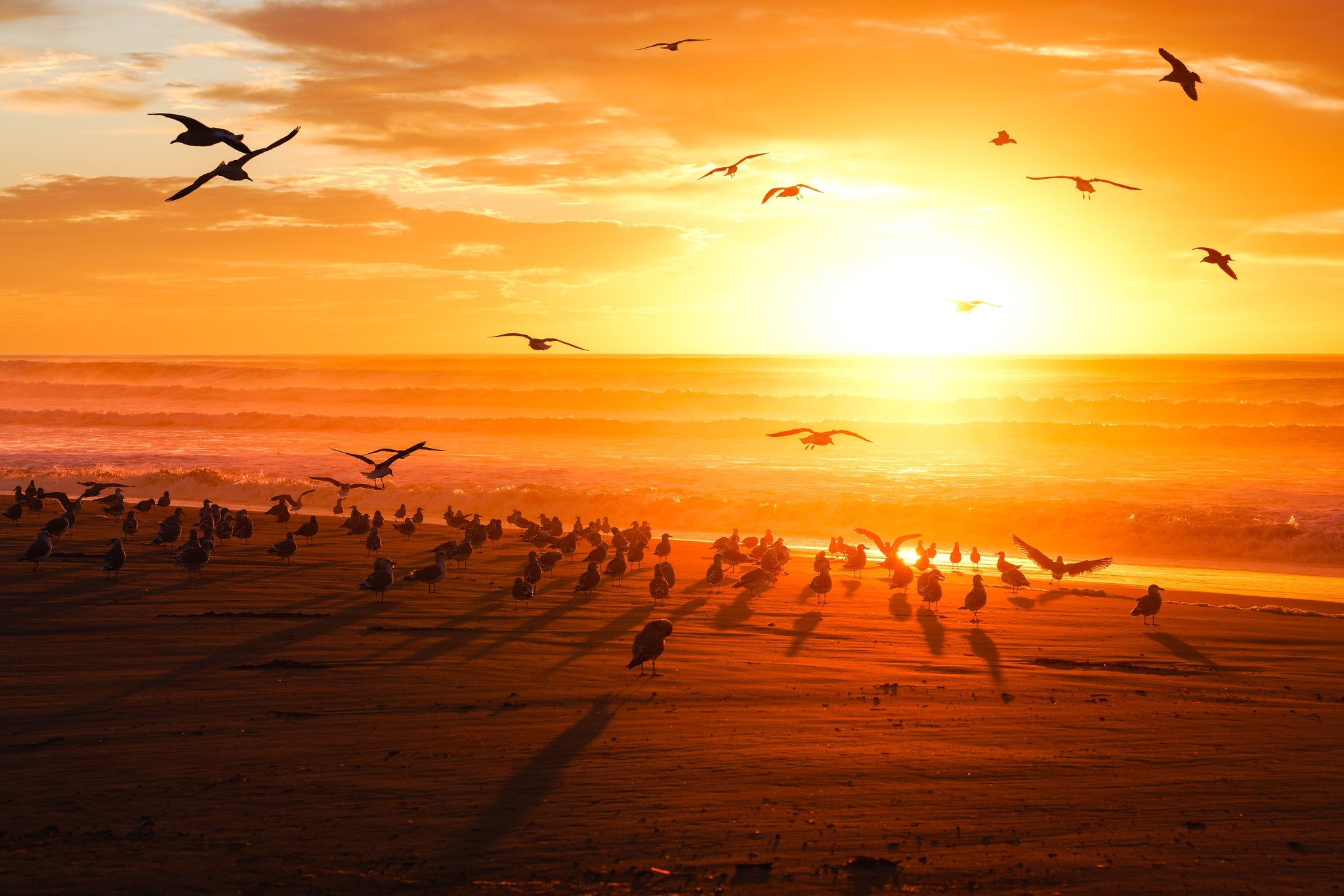 Flock Of Birds Sunset Horizon 2048x1366