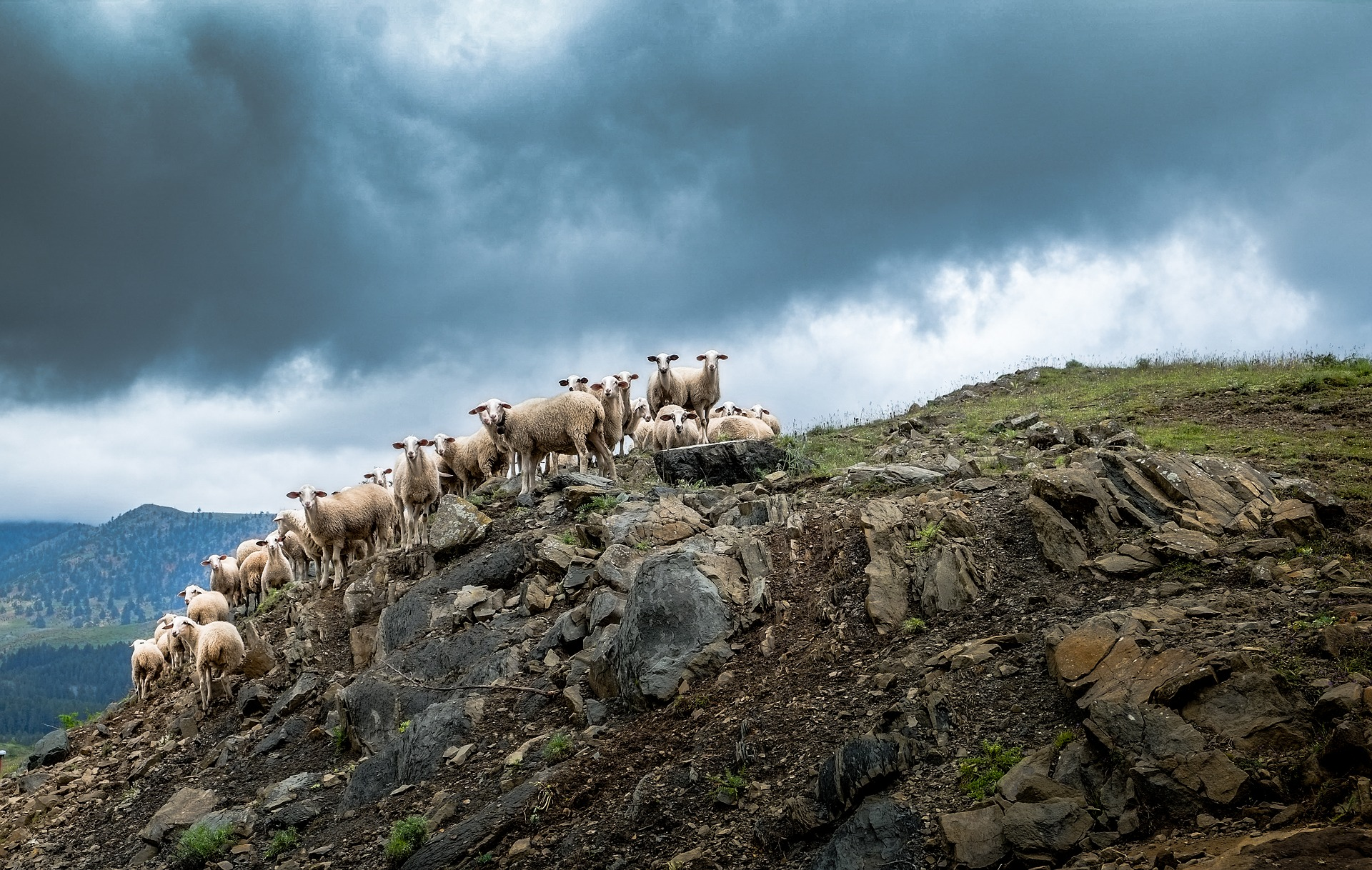 Hill Livestock Rock Sheep 1920x1218