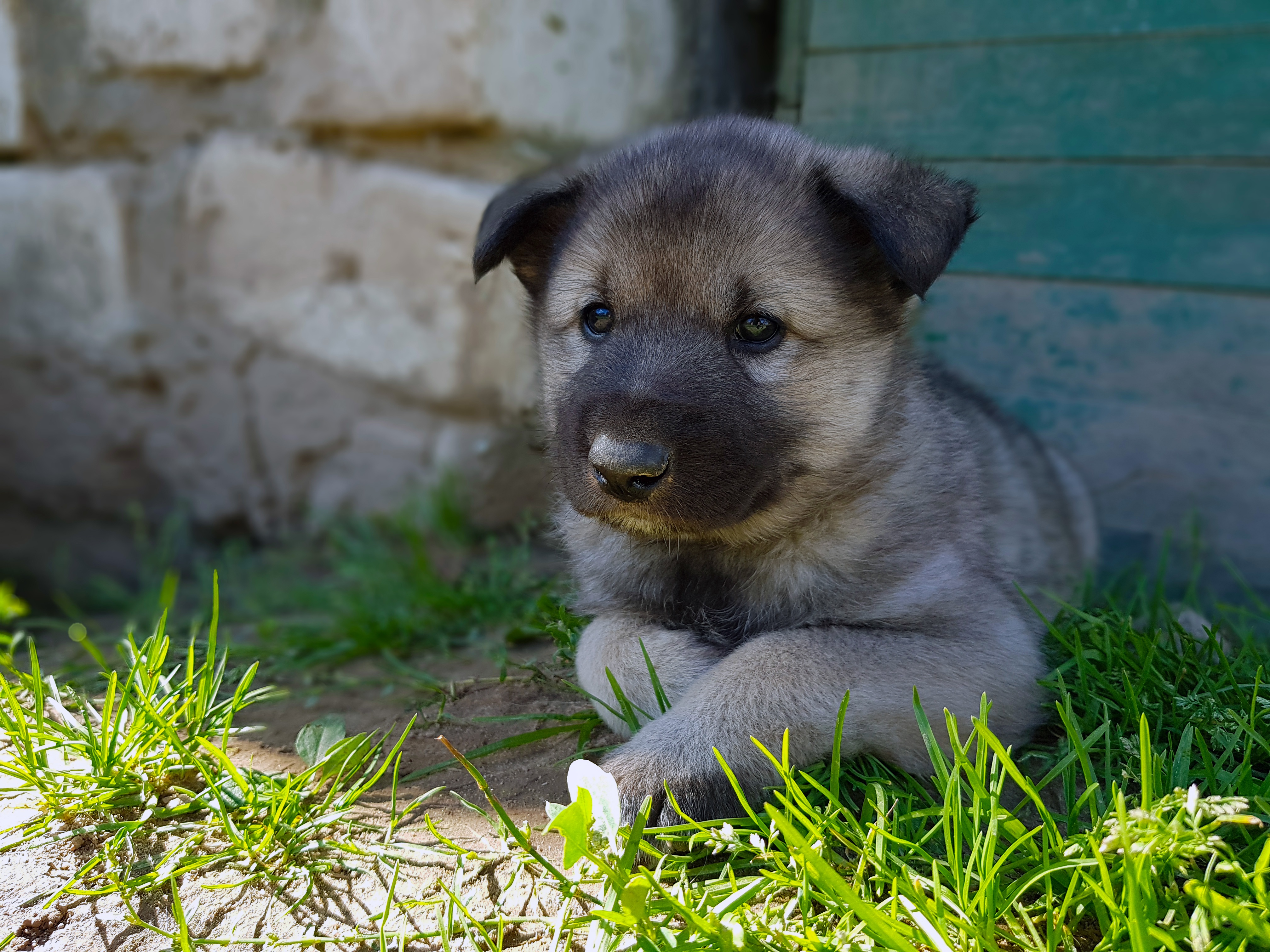 Dog Pet Baby Animal 4032x3024