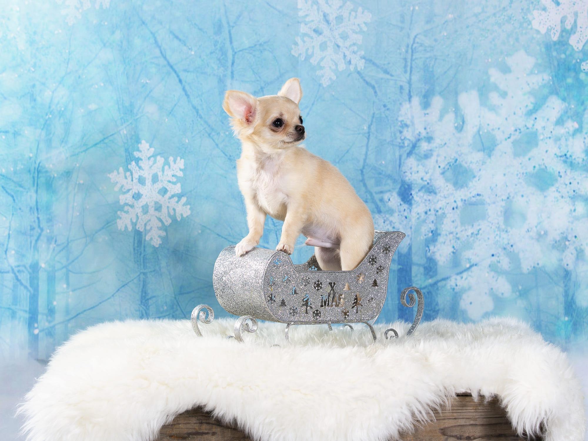 Dog Baby Animal Christmas Ornaments Puppy Pet 2000x1500