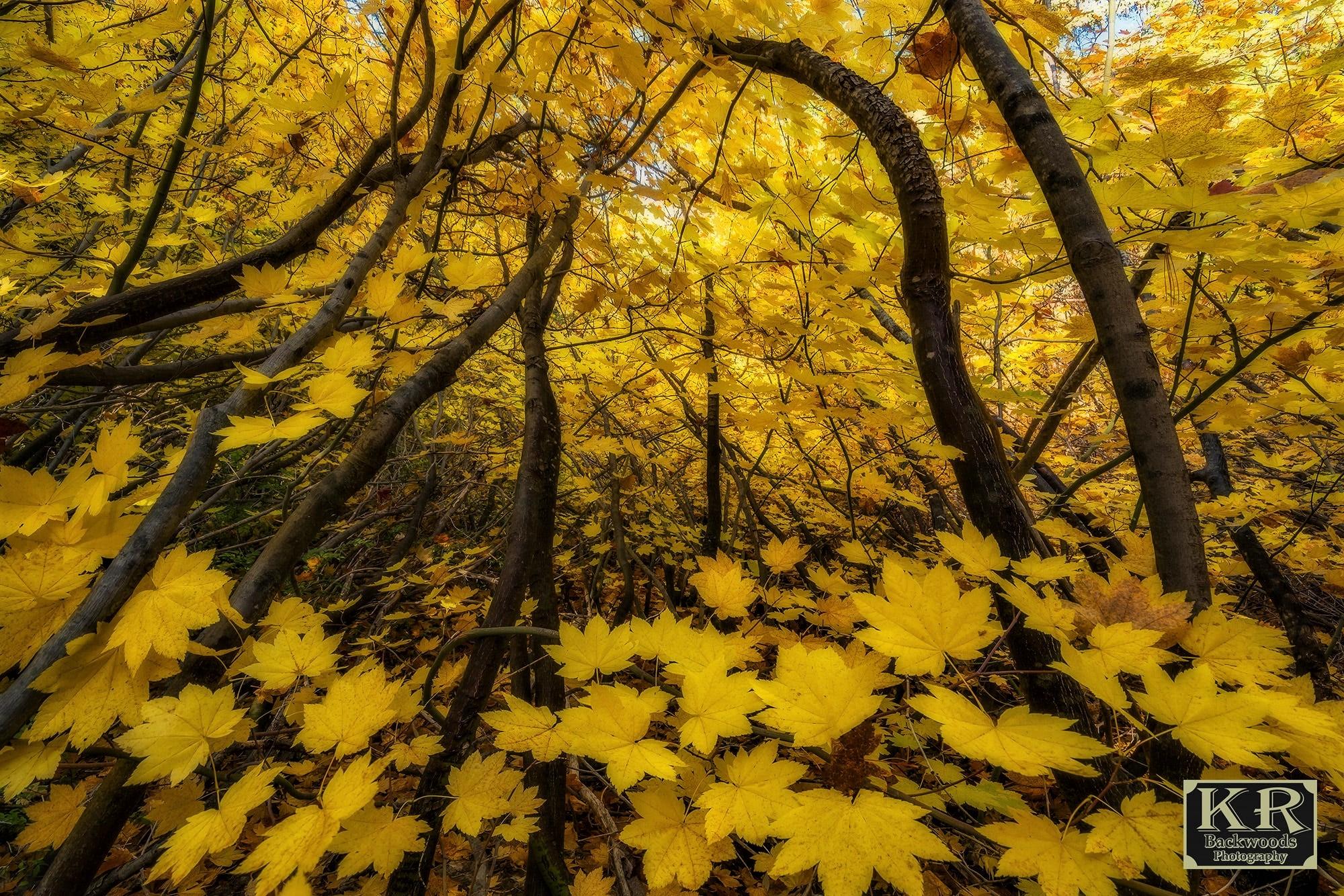 Leaf Fall Branch Foliage 2000x1334