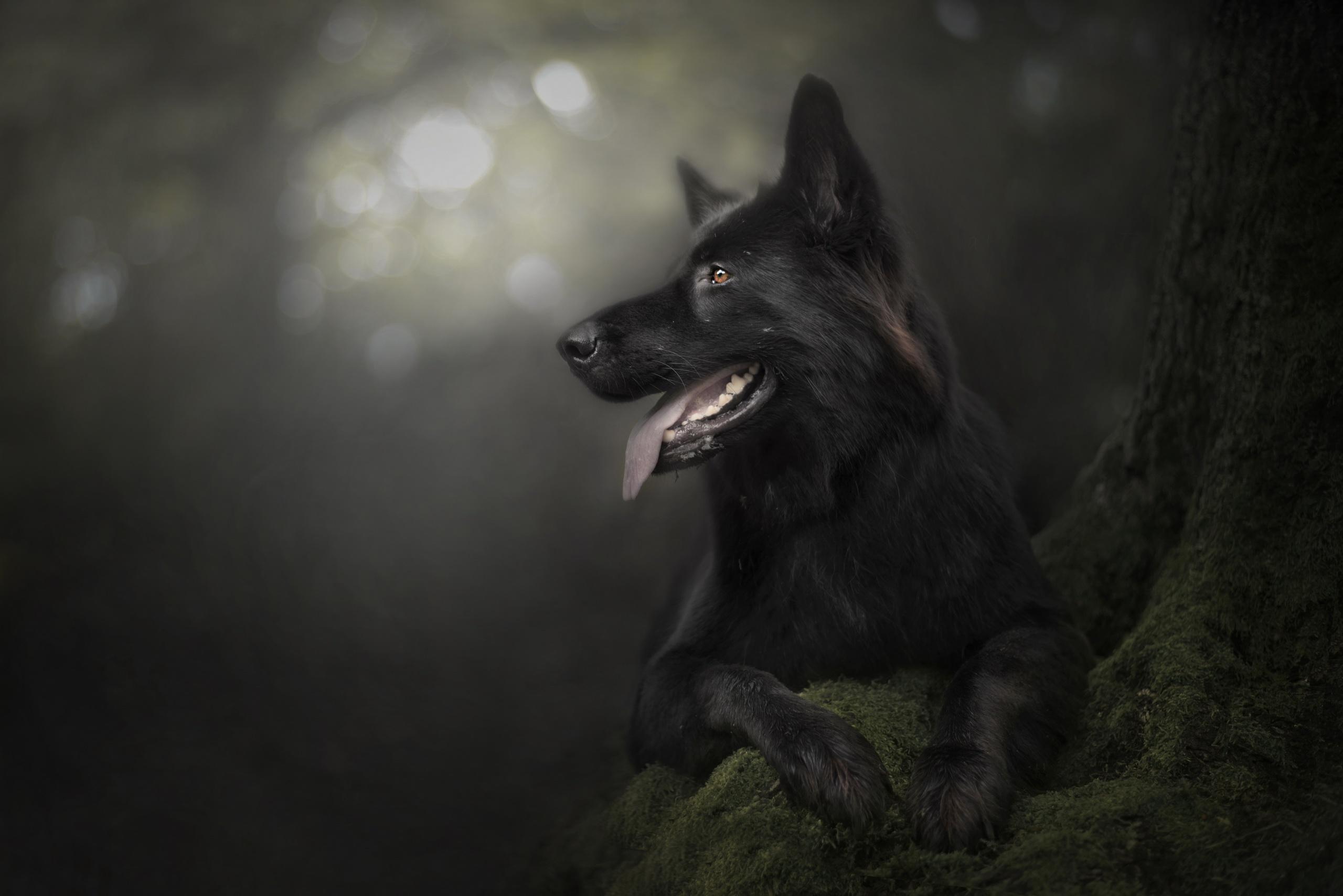 Dog Pet 2560x1709