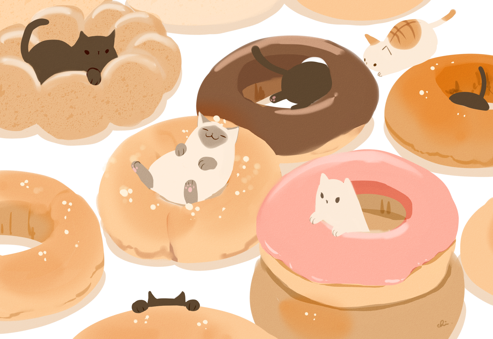 Animal Cat Doughnut 2000x1375