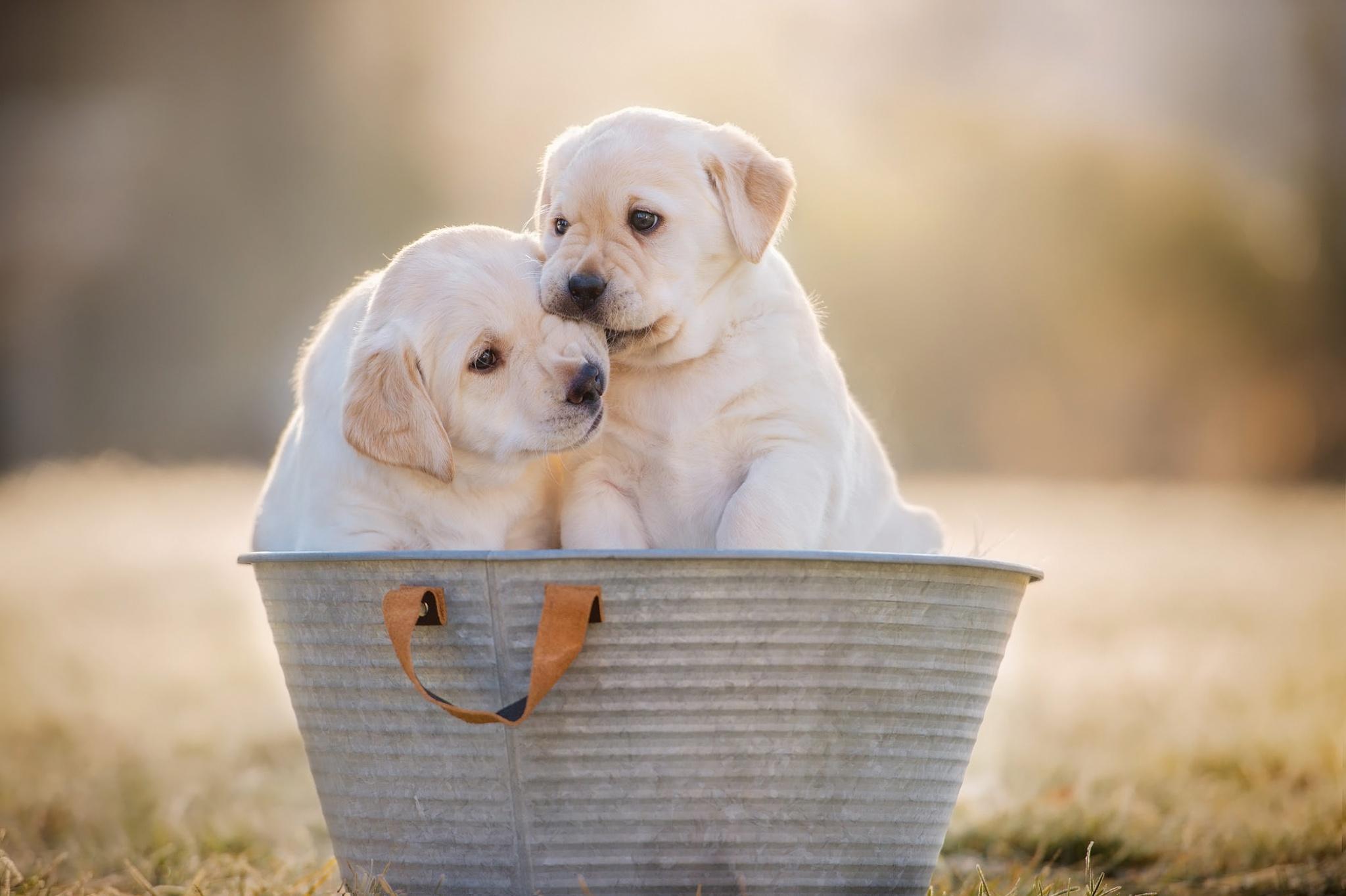 Dog Puppy Pet Baby Animal 2048x1363