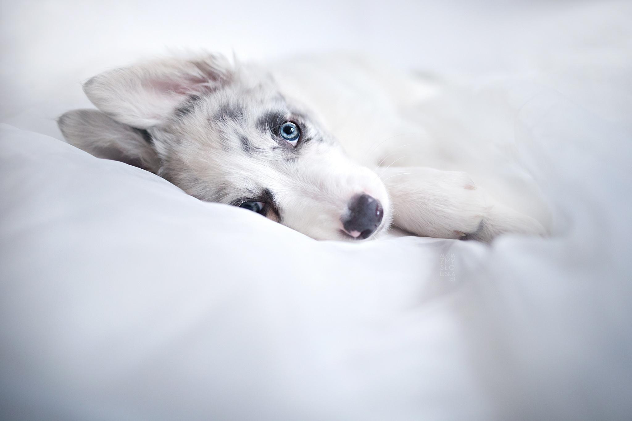 Dog Pet Baby Animal 2048x1365