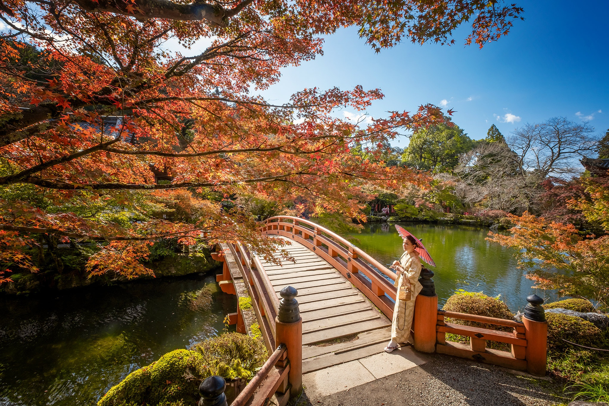 Fall Park Umbrella Japan Bridge 2048x1365