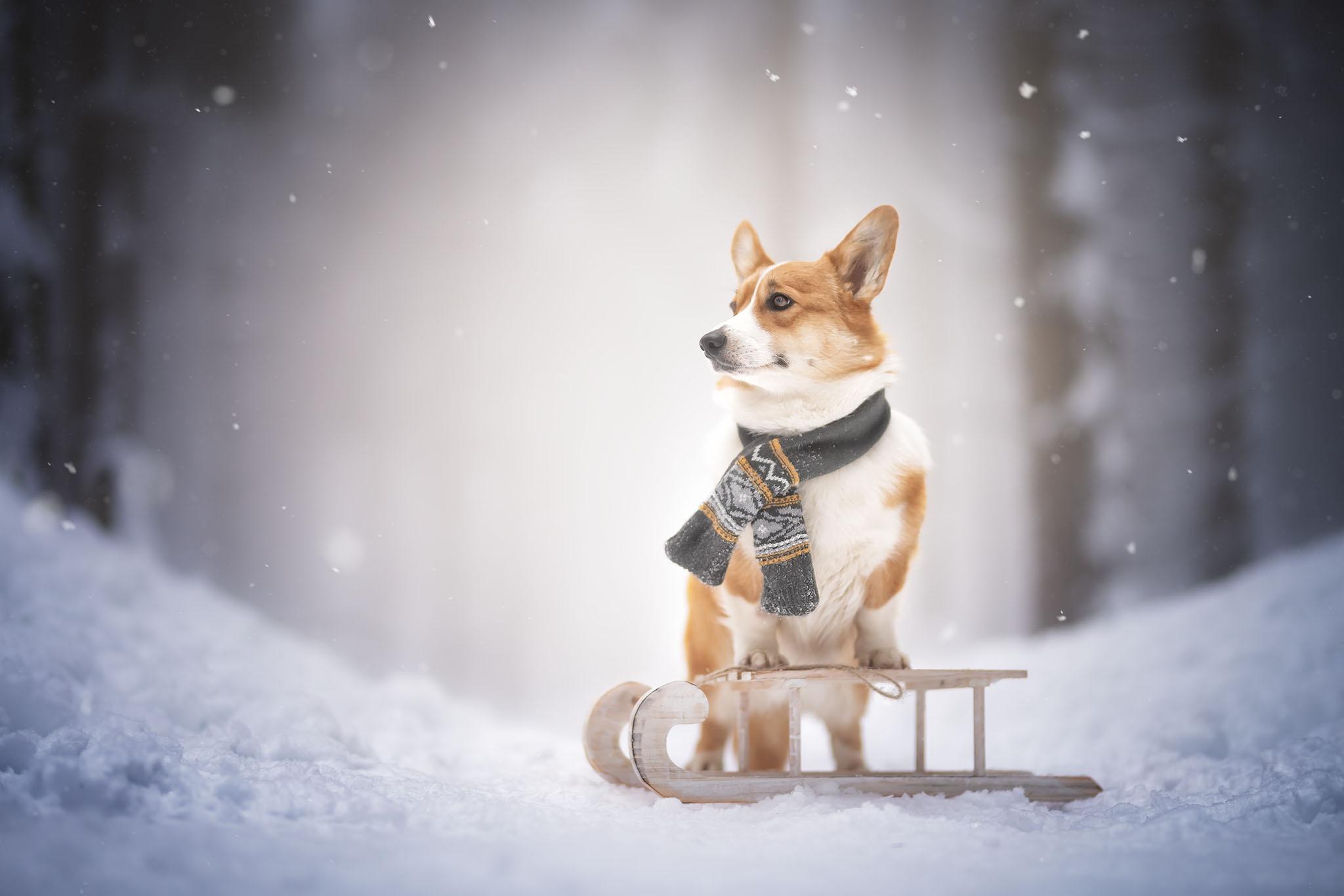 Dog Pet Snow Winter 2048x1365