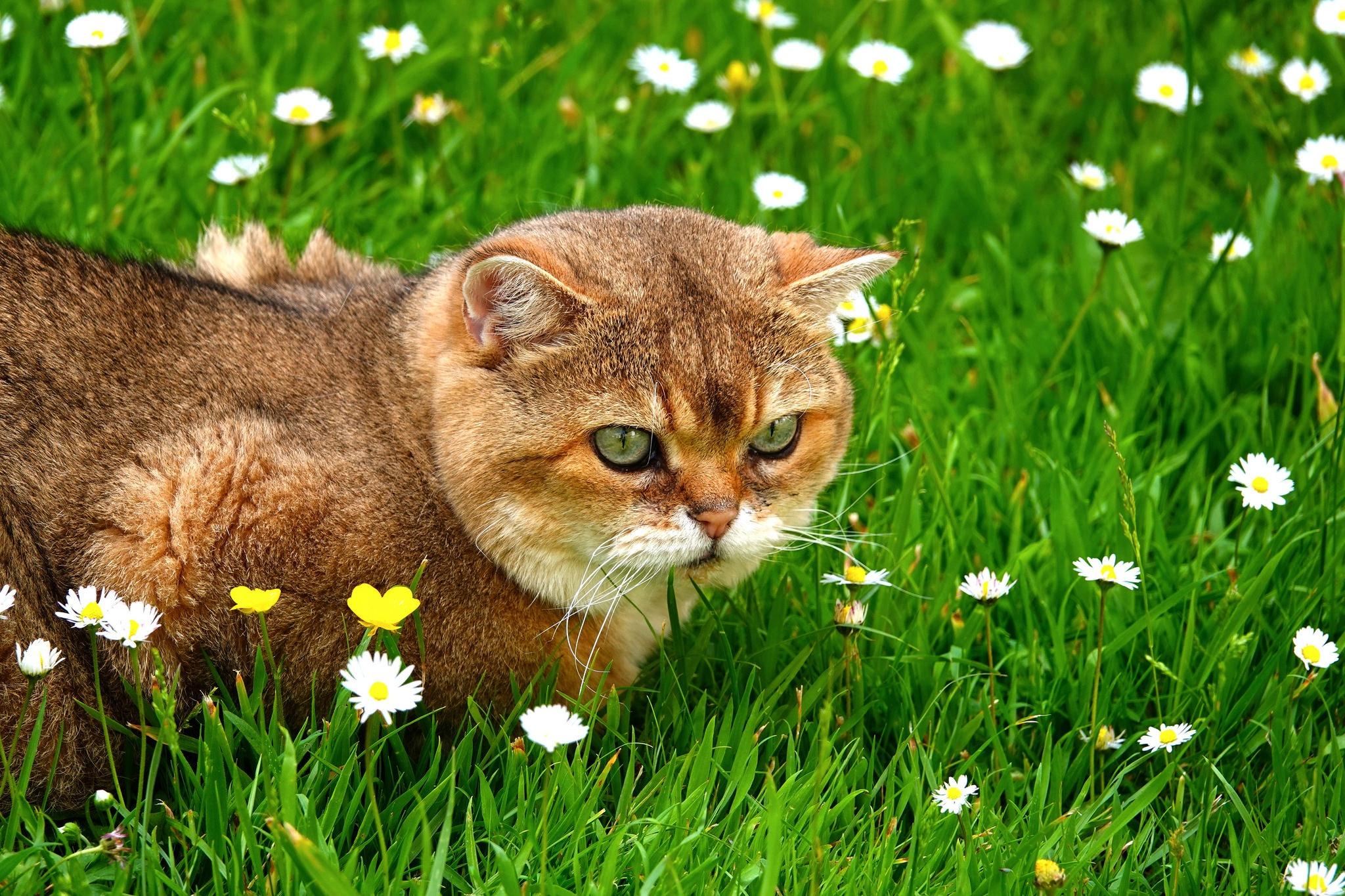 Grass Pet 2048x1365