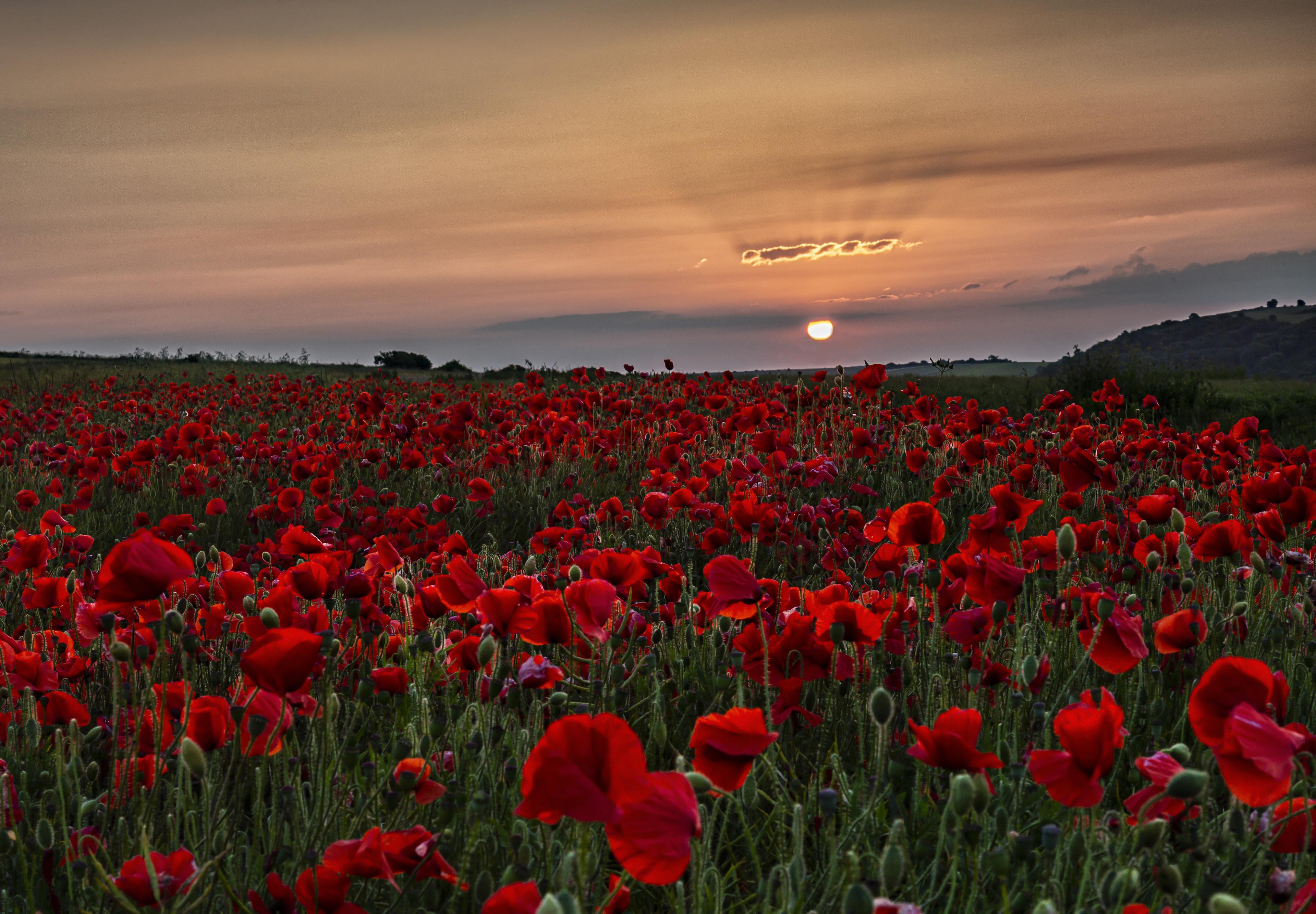 Sunset Nature Red Flower Summer 3840x2670