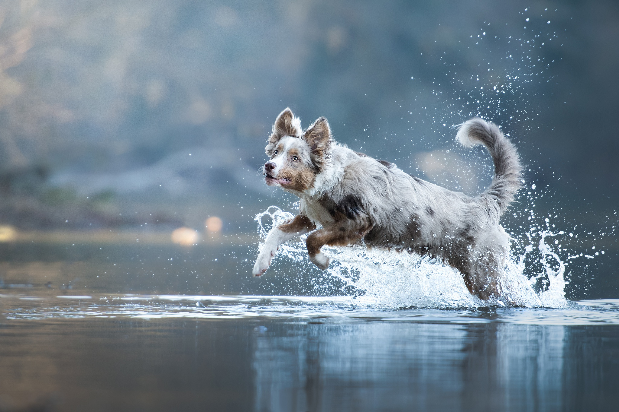 Dog Animals Mammals Outdoors Water In Water Jumping Nature 2048x1366