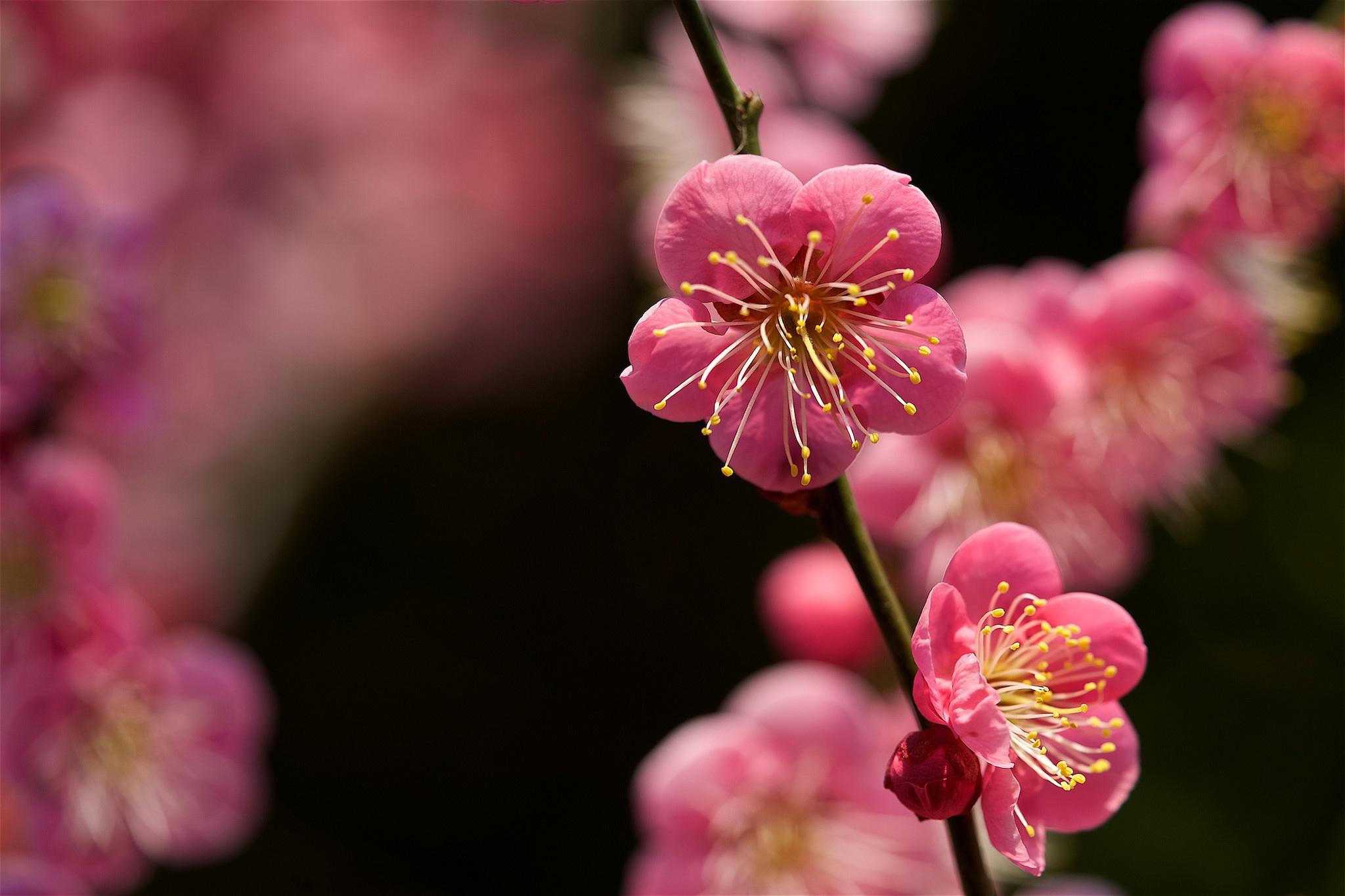 Branch Flower Macro Spring 2048x1365
