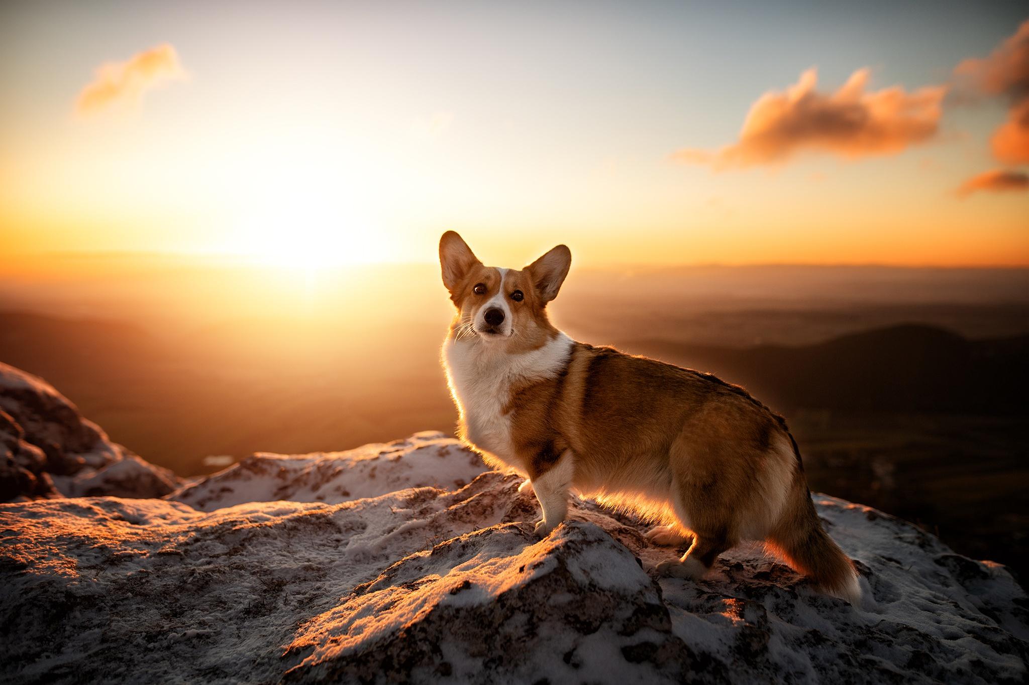 Sunrise Pet Dog 2048x1365
