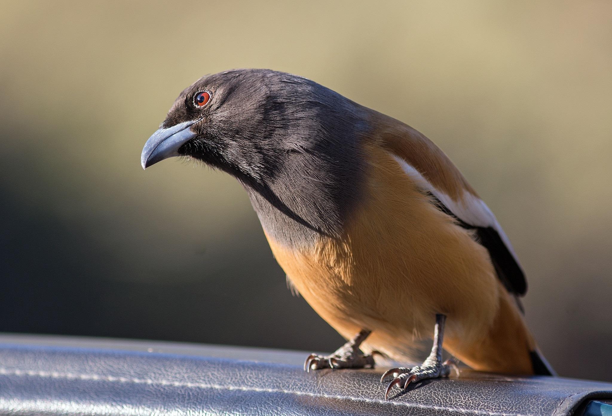 Bird 2048x1390