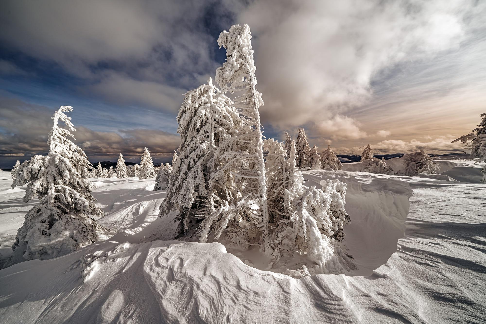 Cloud Snow Fir Tree 2000x1334