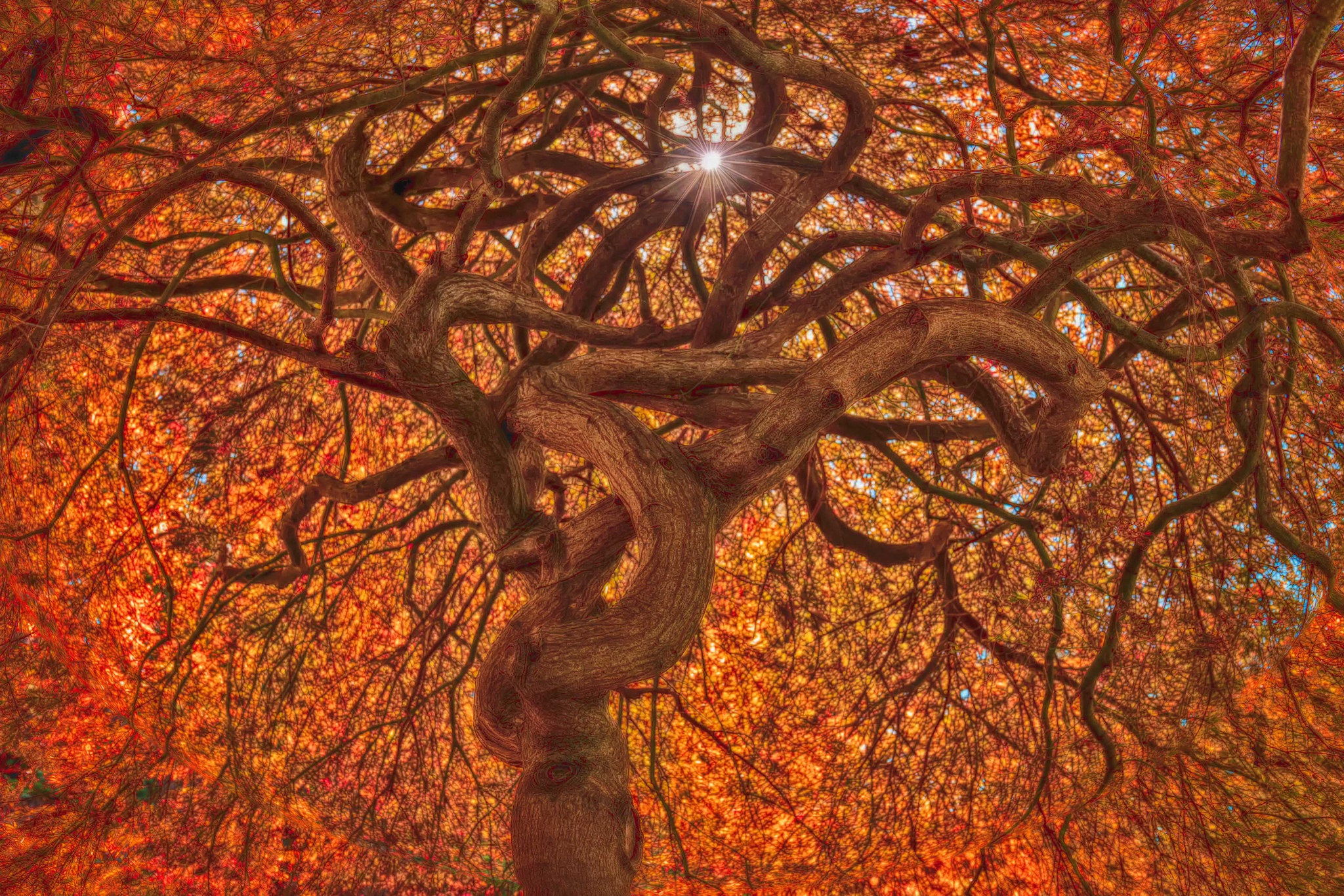 Nature Branch Fall Foliage Twisted Tree 2048x1365