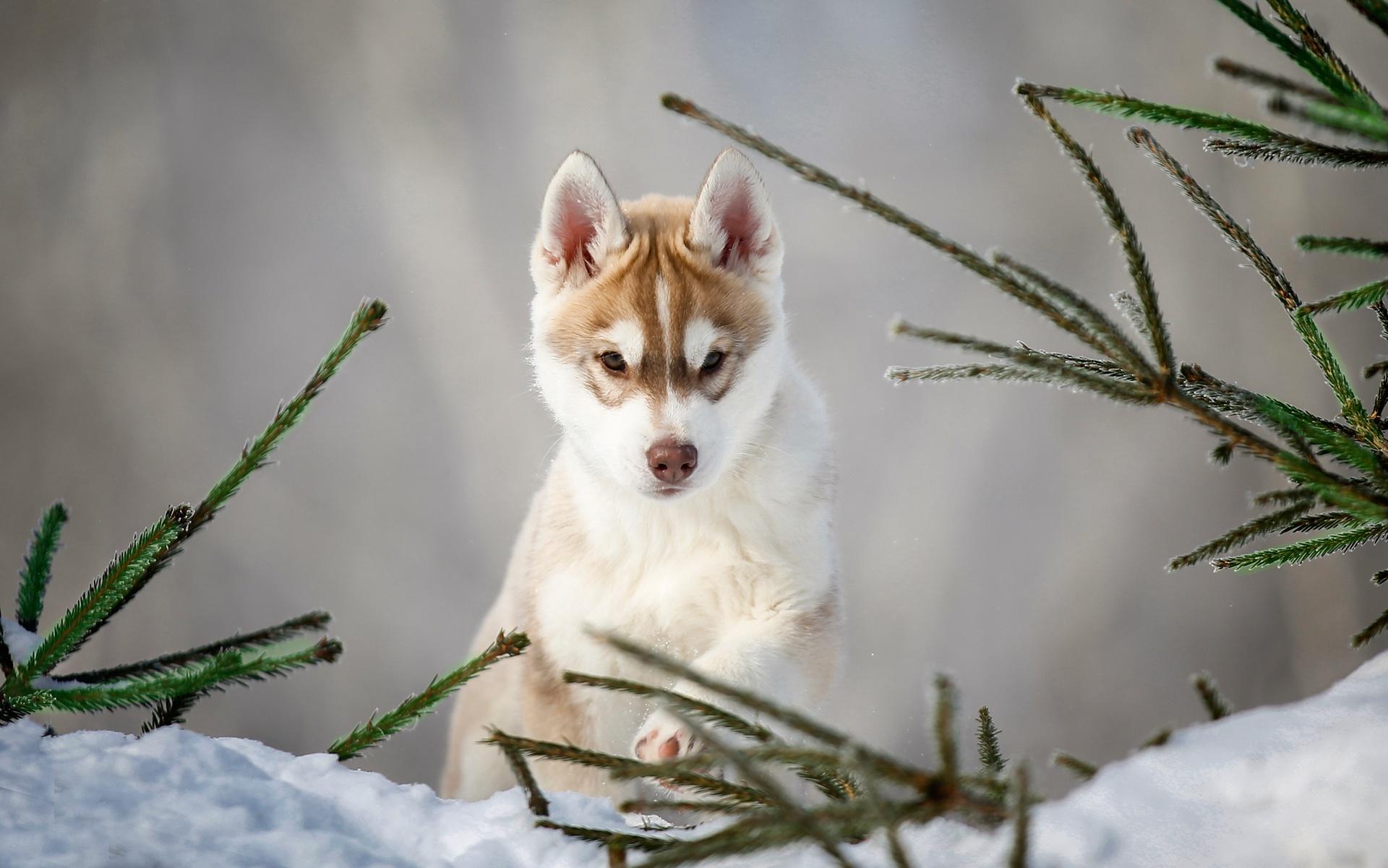 Dog Pet Baby Animal Puppy 1920x1201