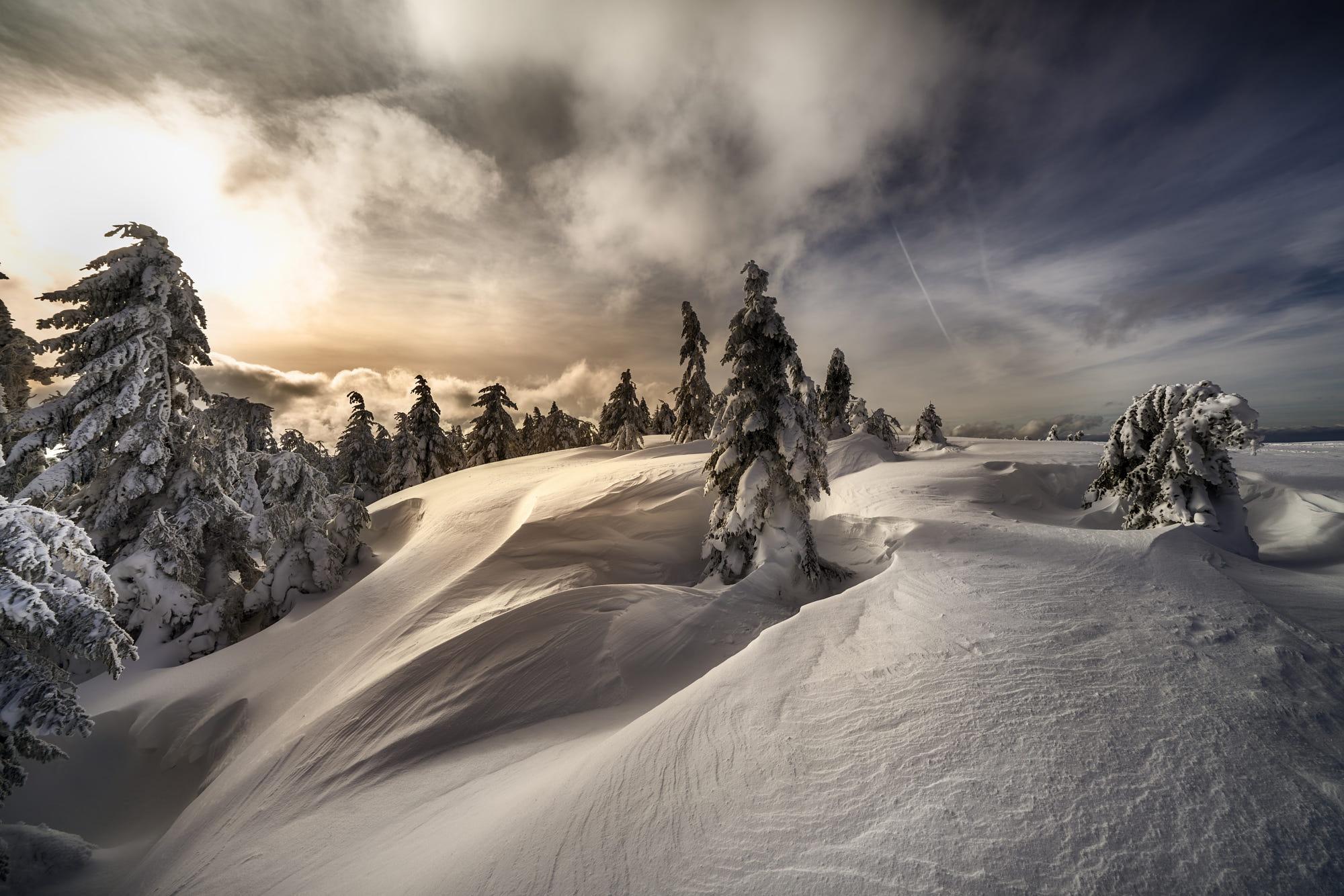 Nature Snow Spruce Winter 2000x1334