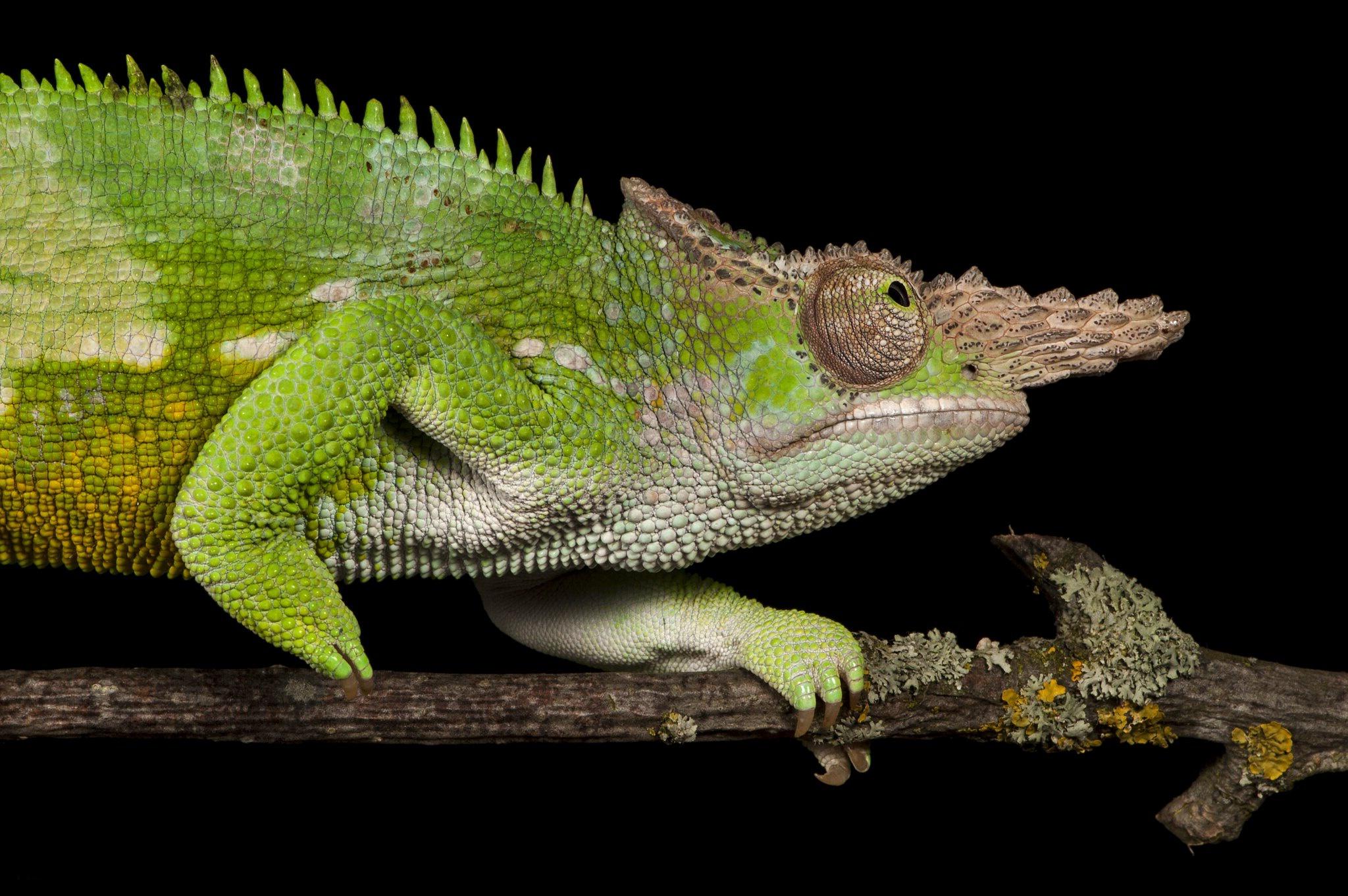 Animal Chameleon 2048x1361