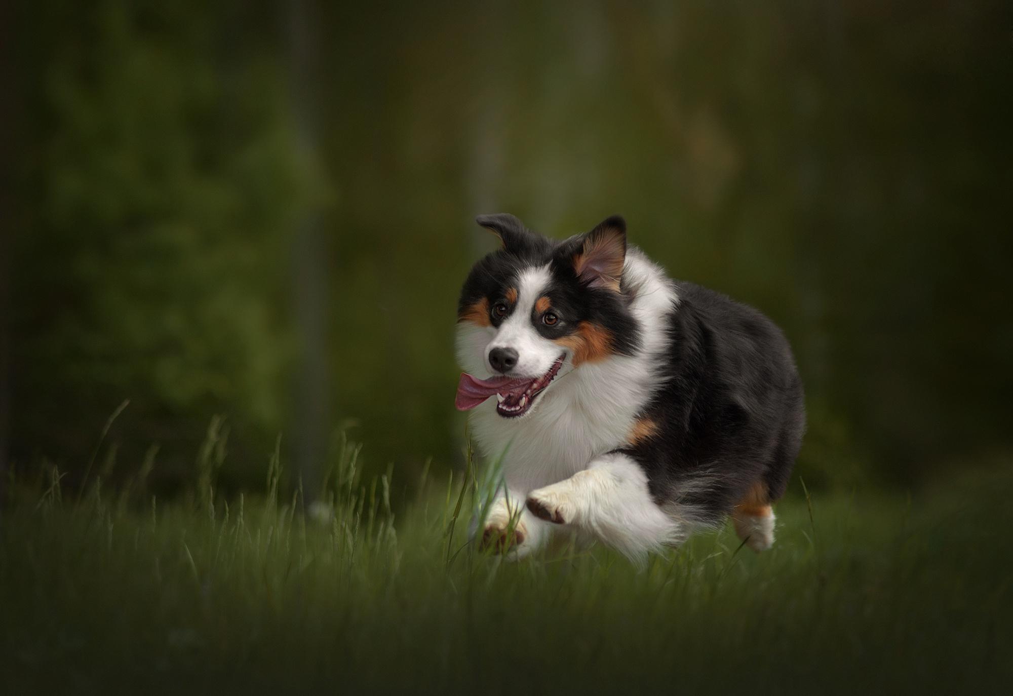 Dog Pet 2000x1374