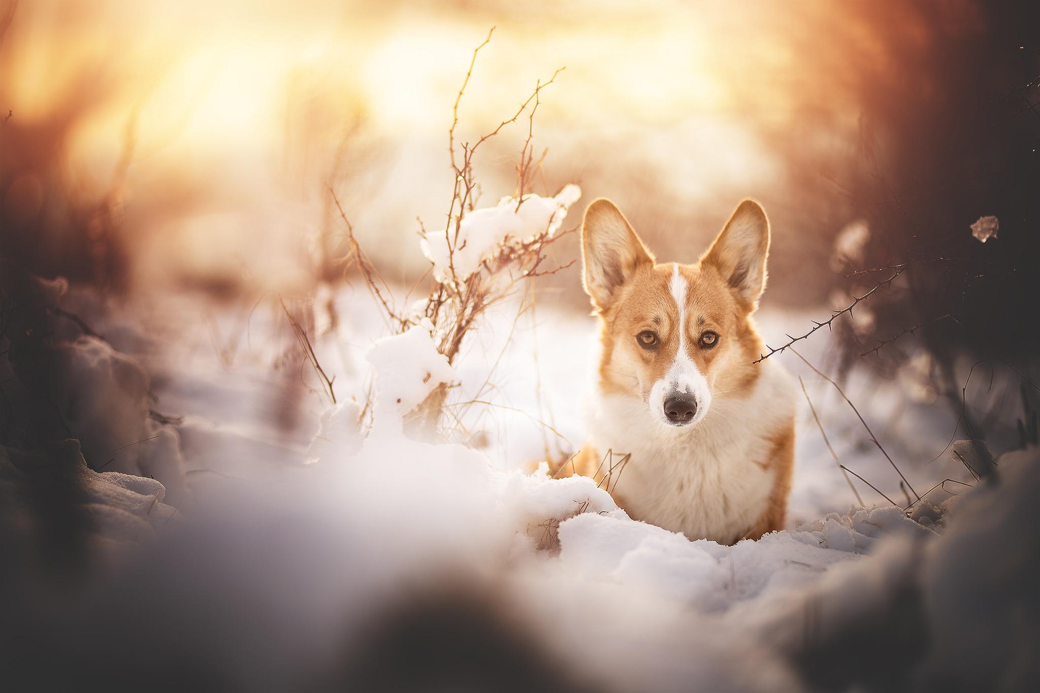 Winter Snow Pet Dog 2048x1365