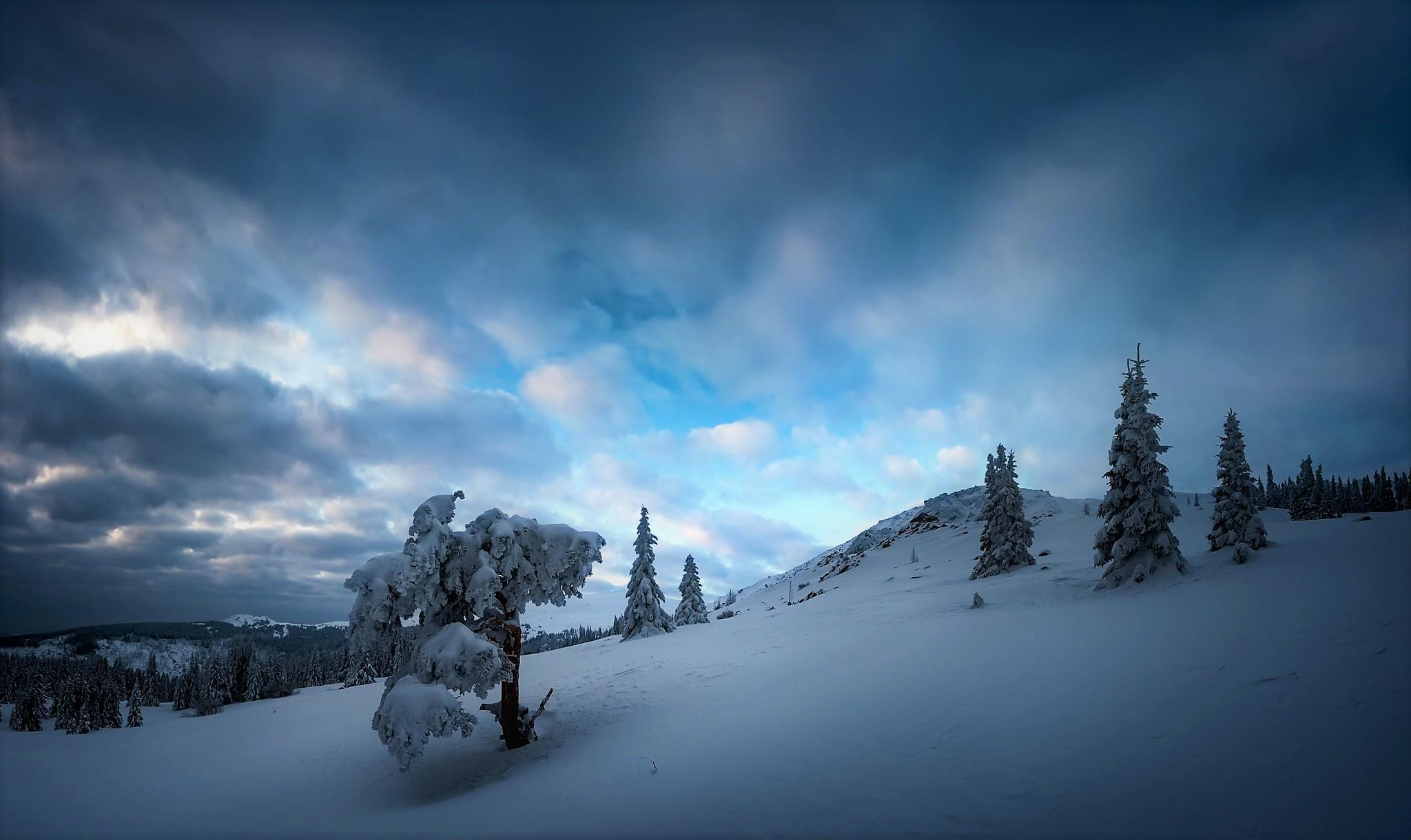 Tree Snow Cloud Sky 2048x1220