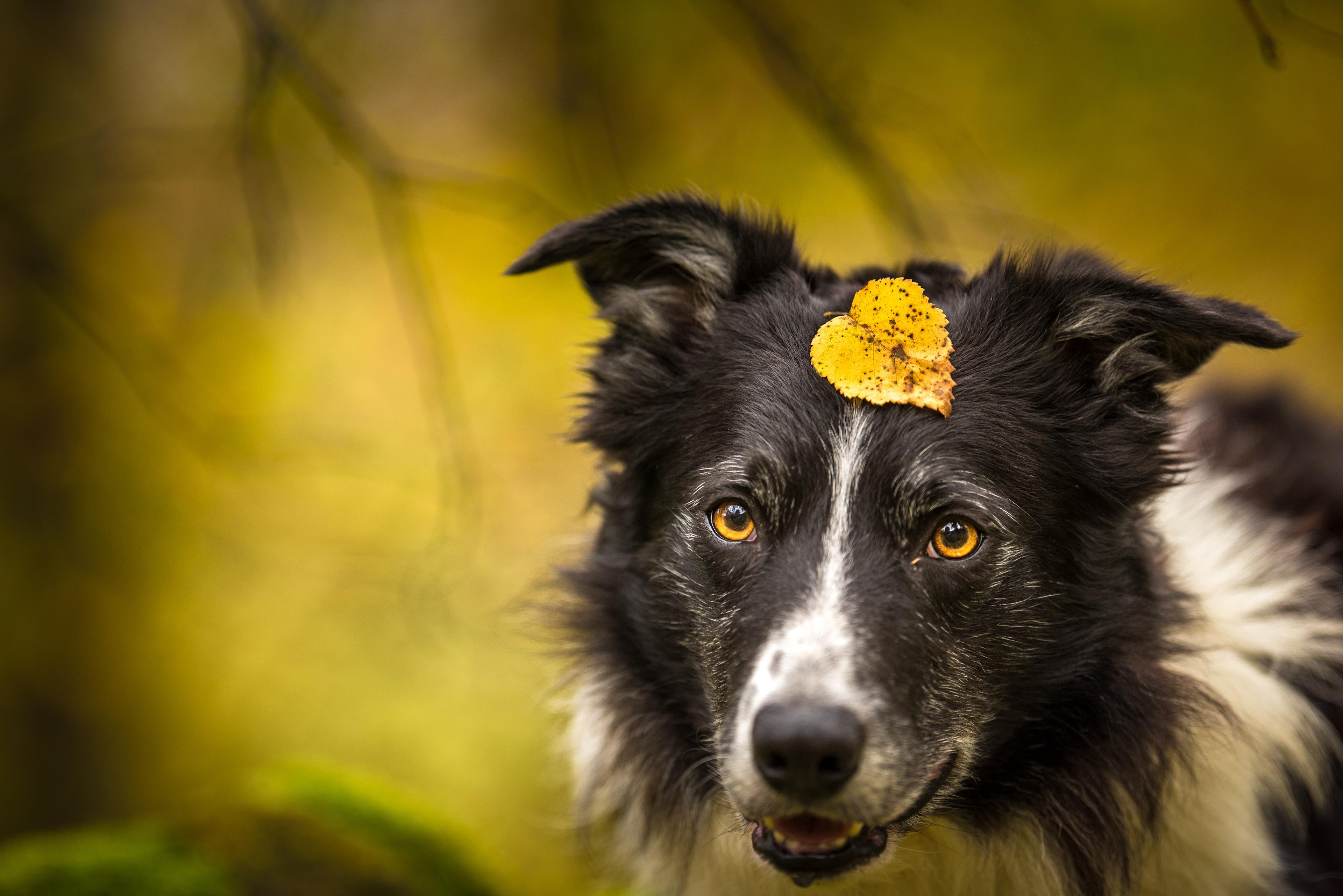Dog Pet 3840x2563