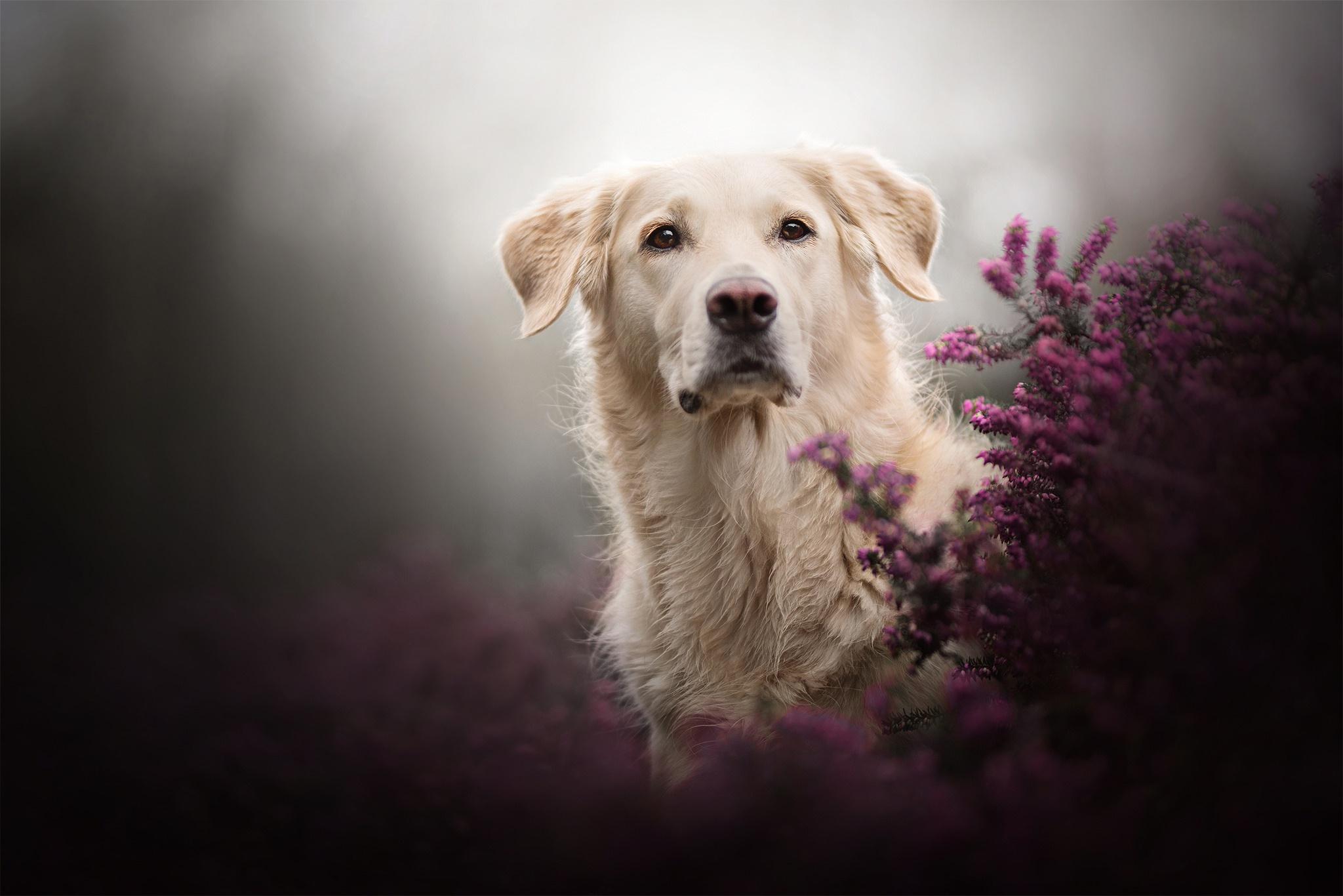 Dog Pet 2048x1367