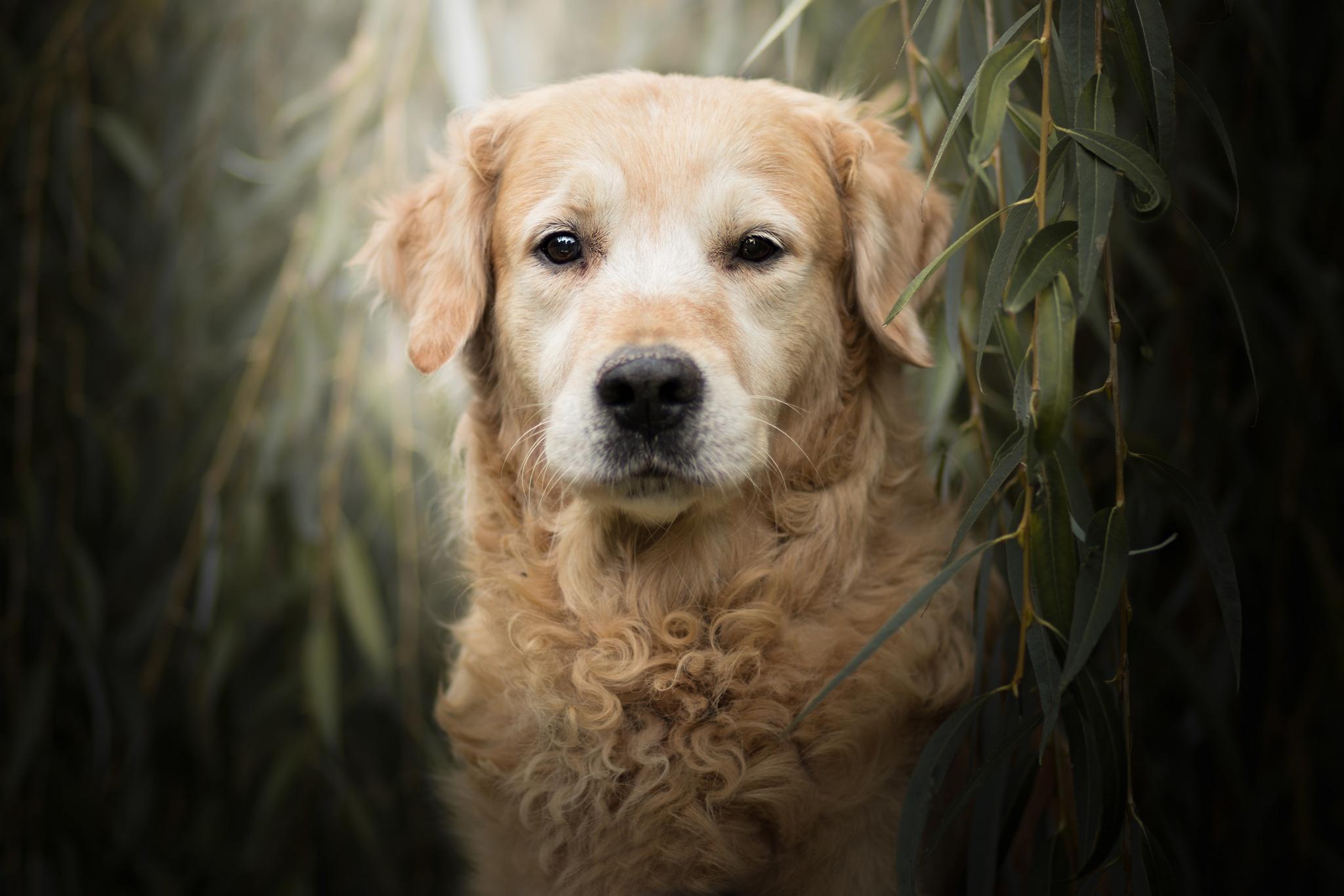 Dog Pet Stare 2048x1365