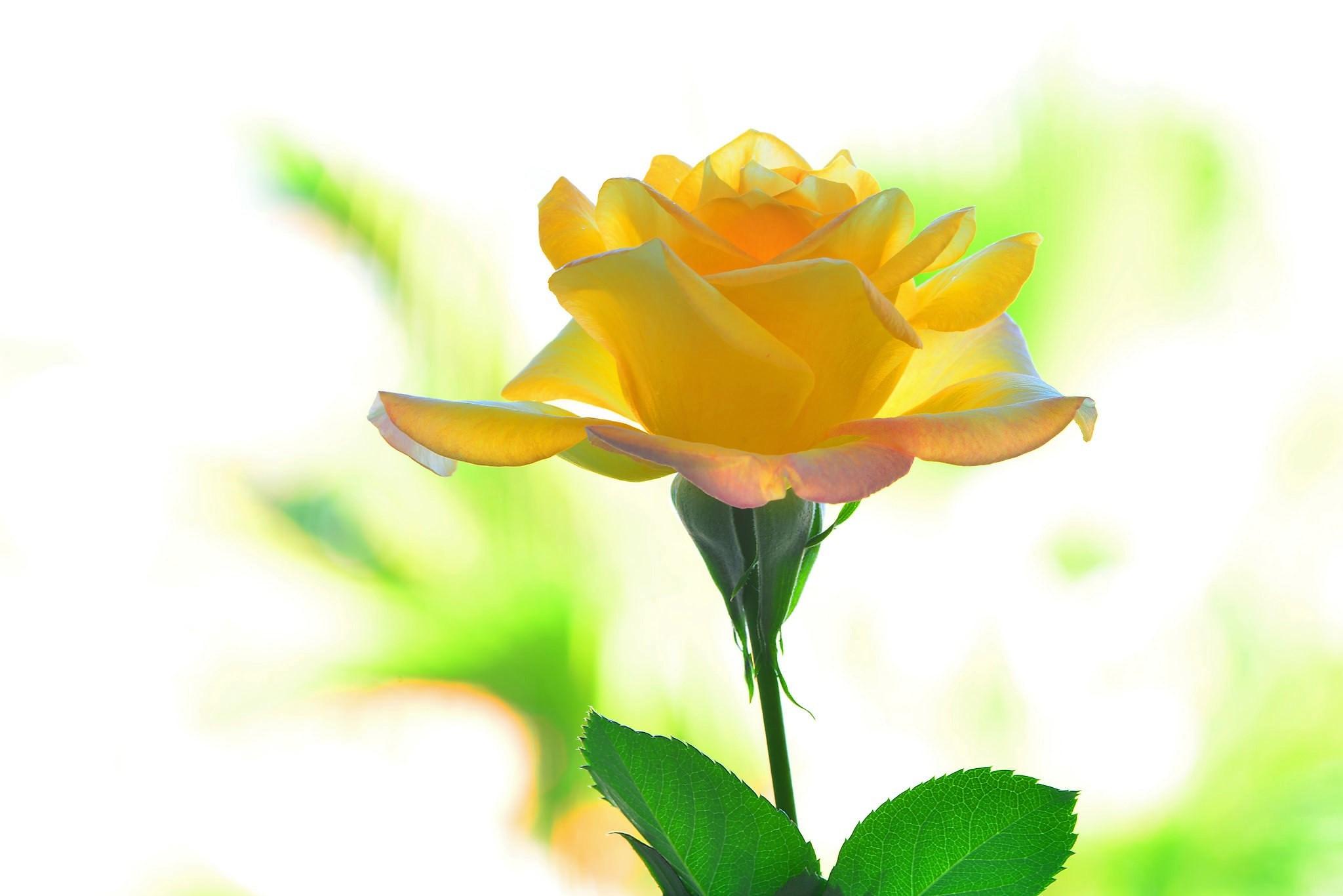 Yellow Flower Macro 2048x1367