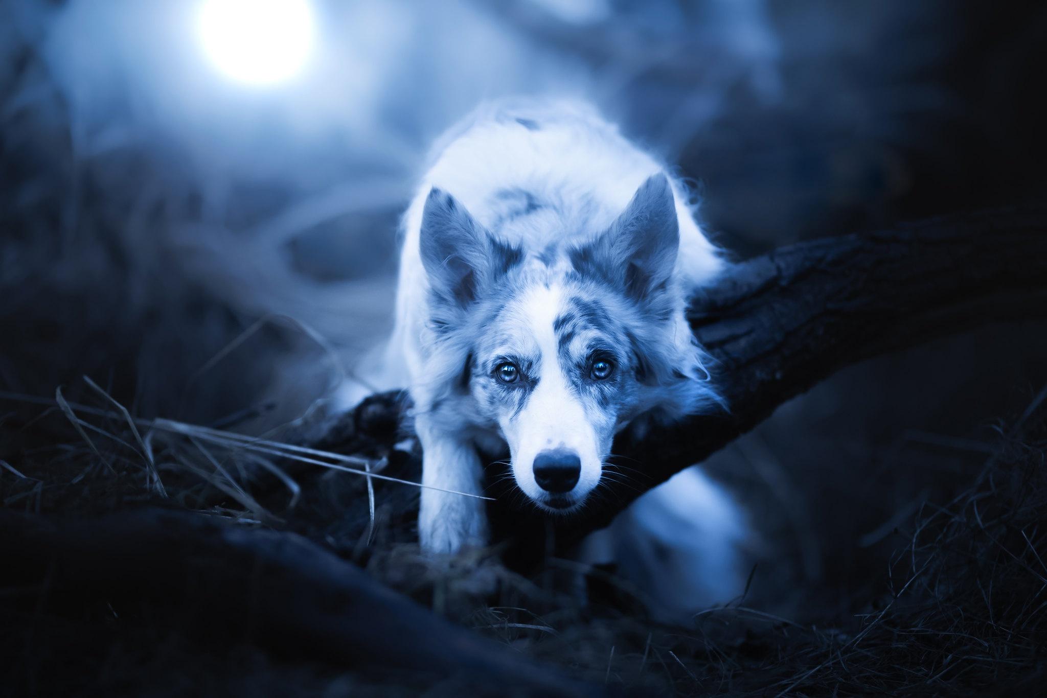 Dog Pet 2048x1366
