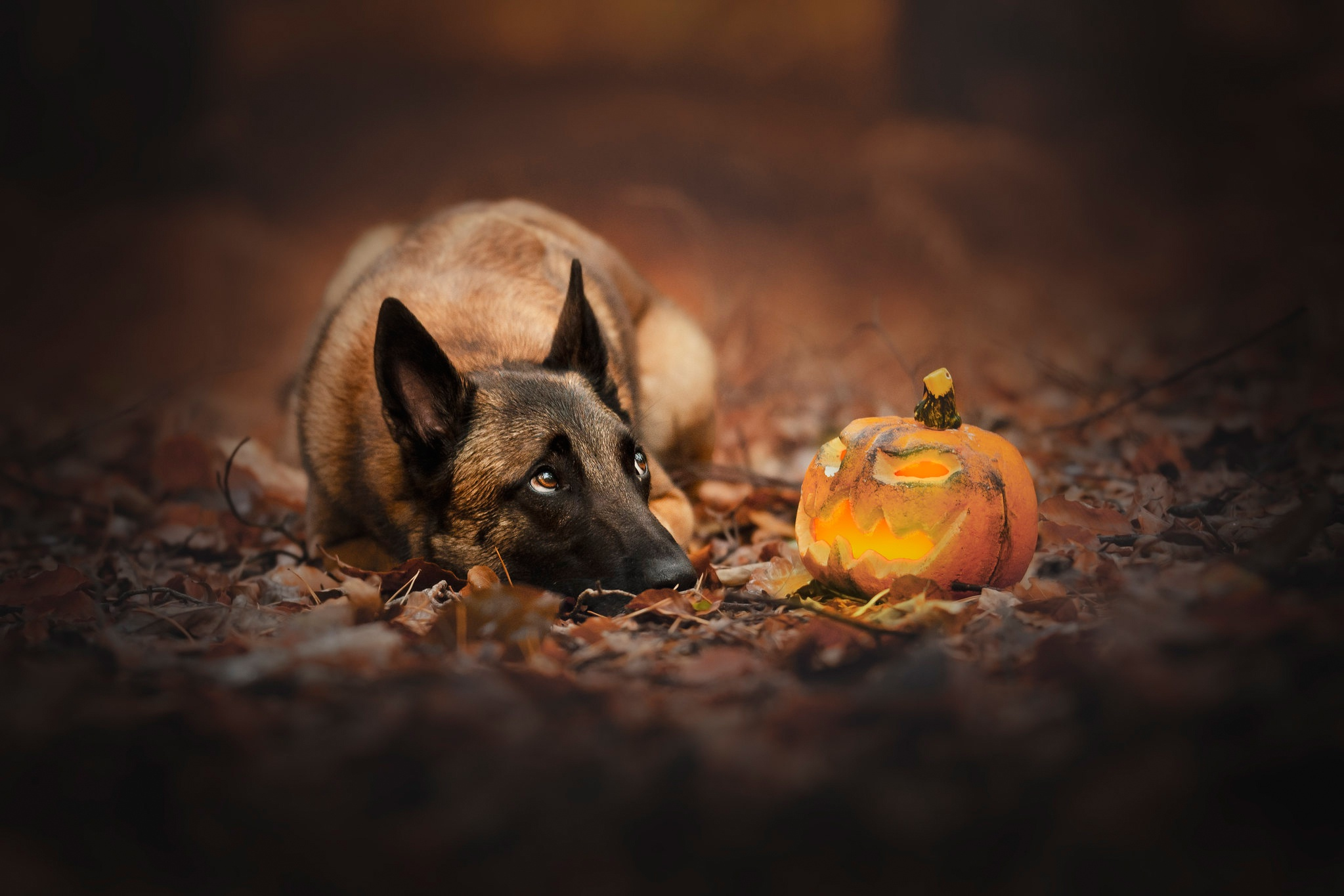 Dog Pet 2047x1365