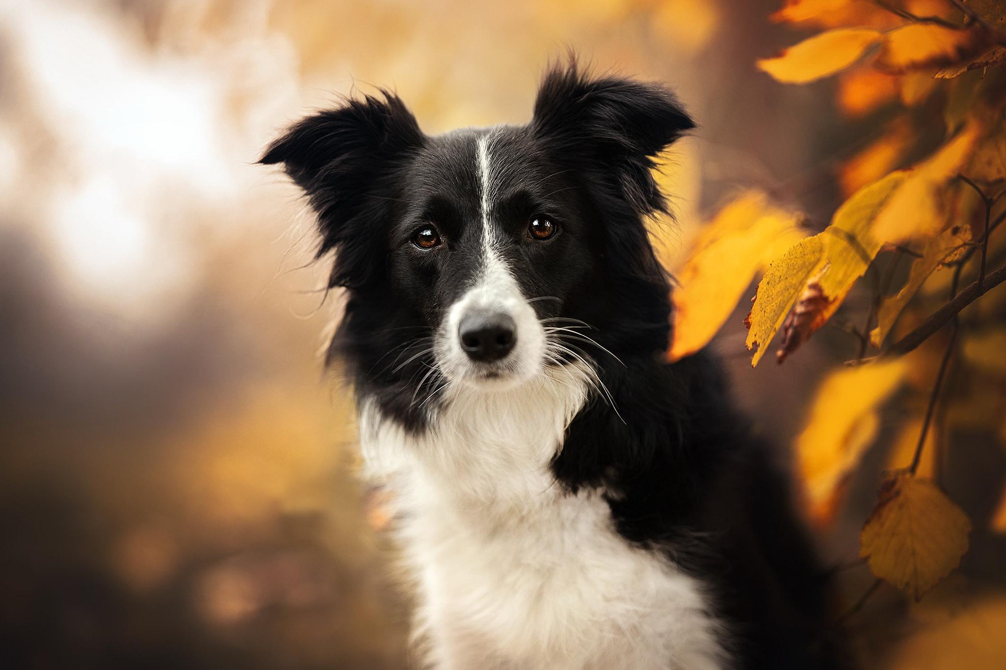 Dog Pet Depth Of Field 2048x1365