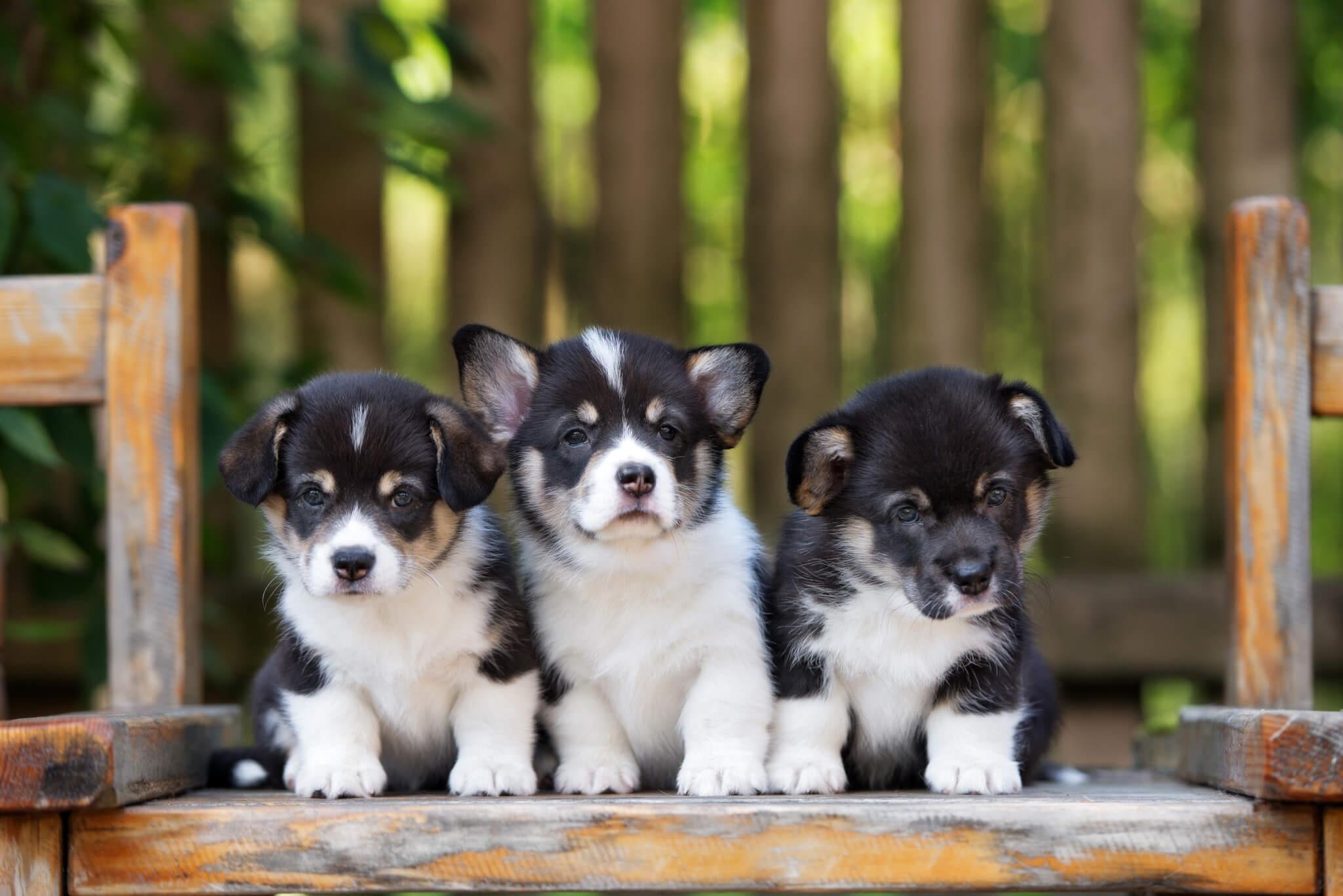 Dog Pet Baby Animal 2048x1367