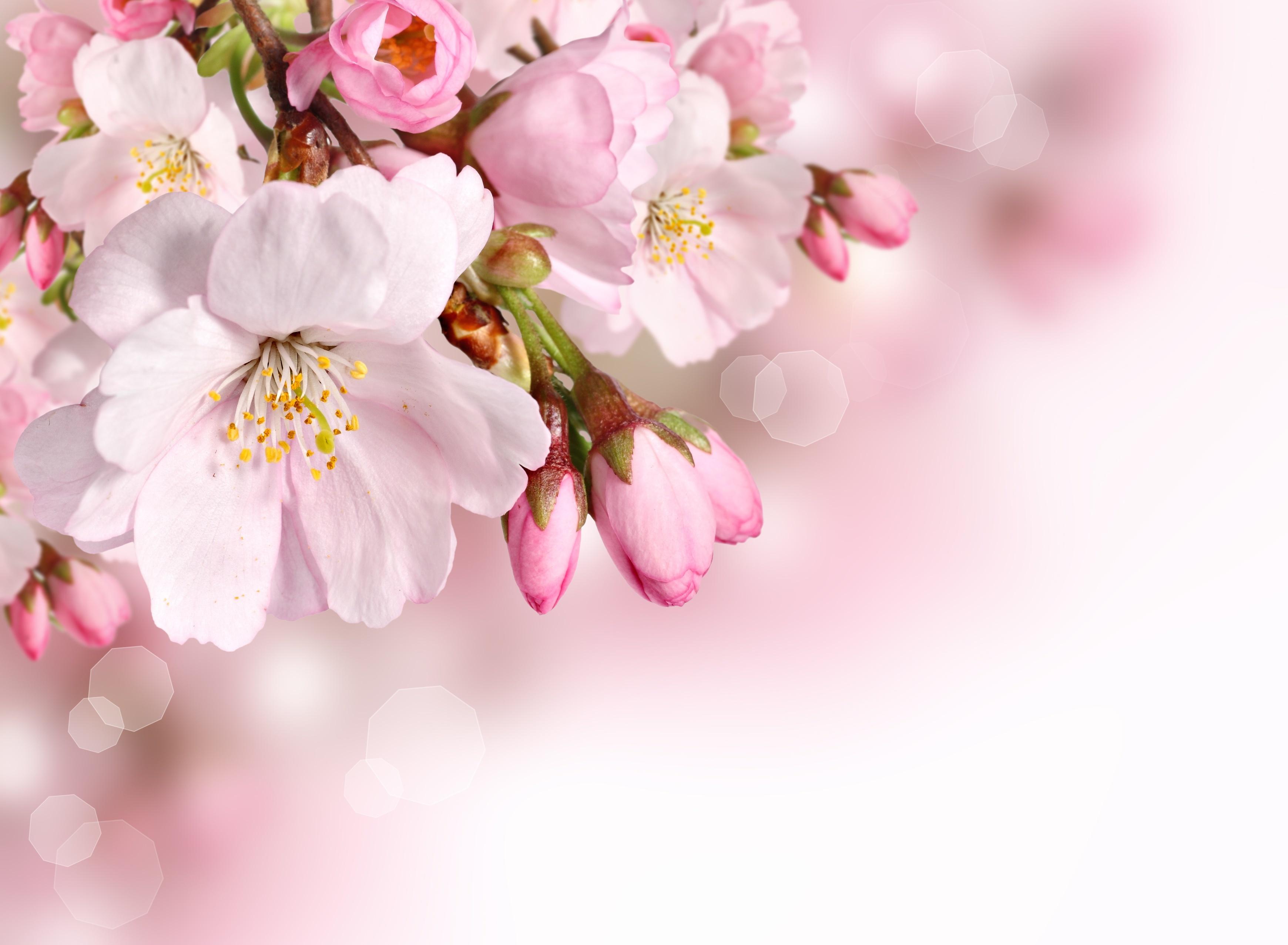 Close Up Flower Nature Pink Flower Spring 3480x2553
