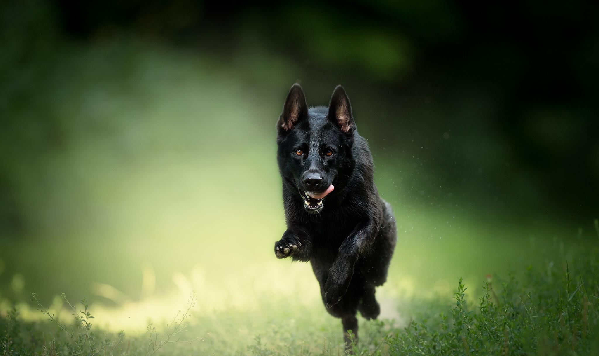 Dog Pet Depth Of Field Sunny 2048x1218