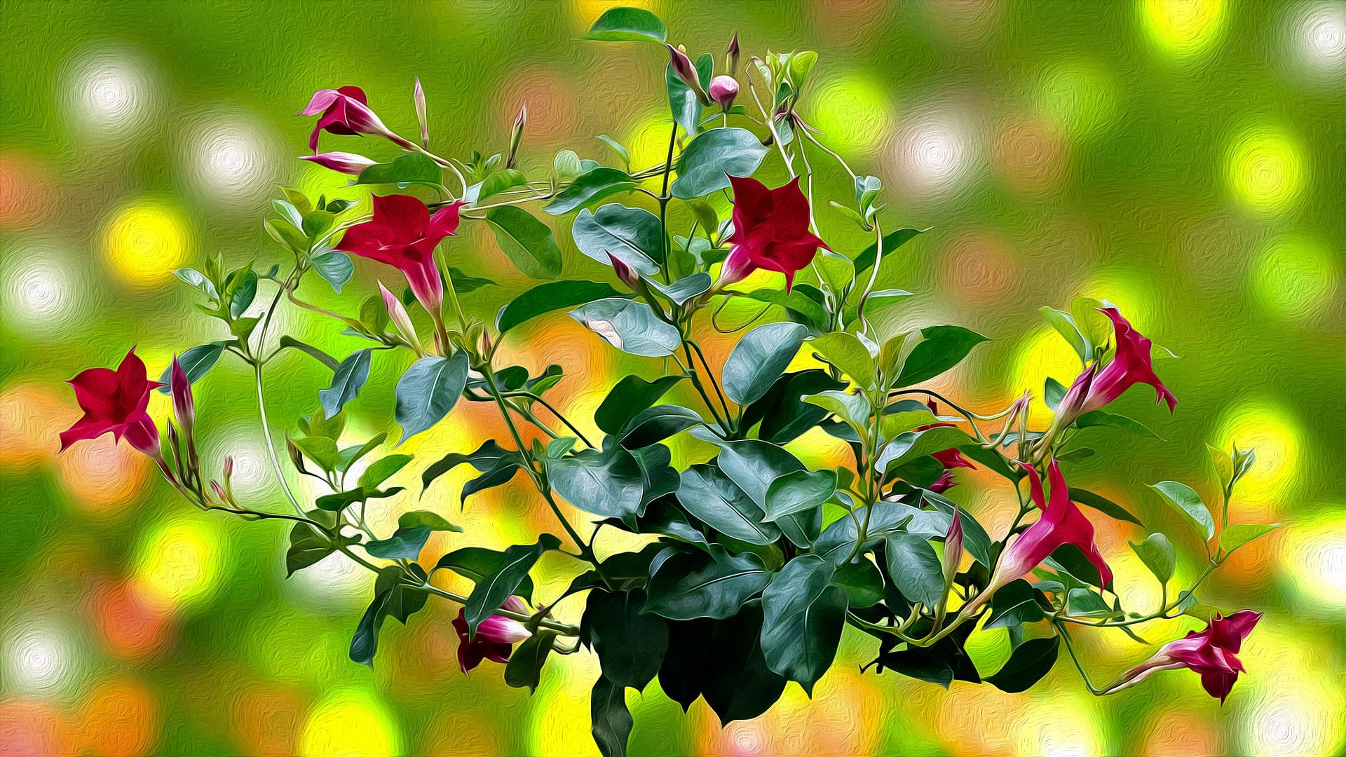 Flower 1920x1080