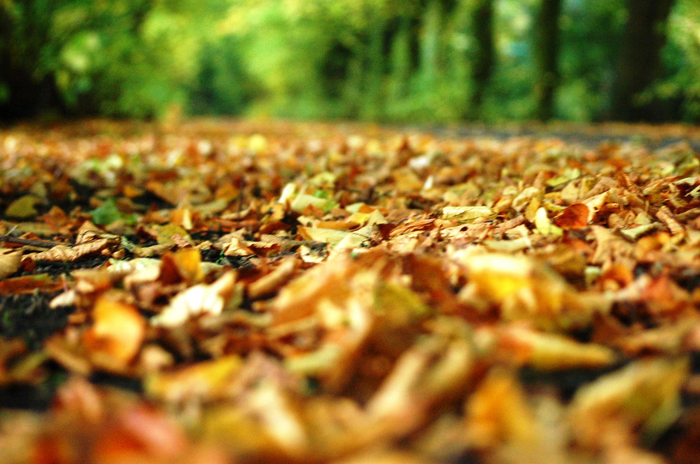 Leaf Nature Fall 2256x1496