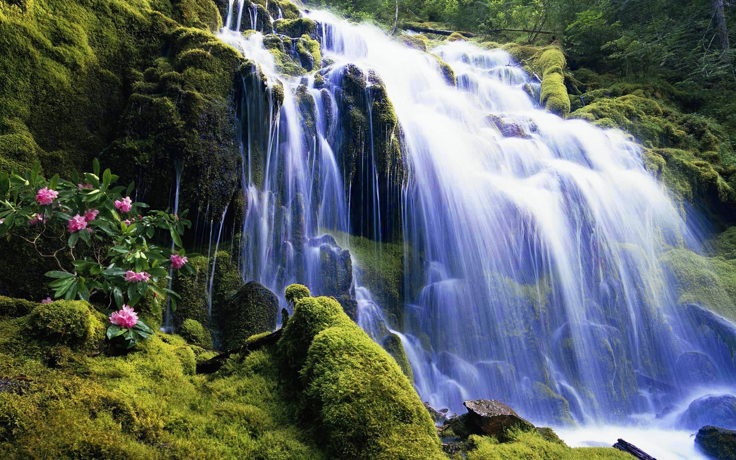 Earth Flower Forest Moss Rock Tree Waterfall 2560x1600