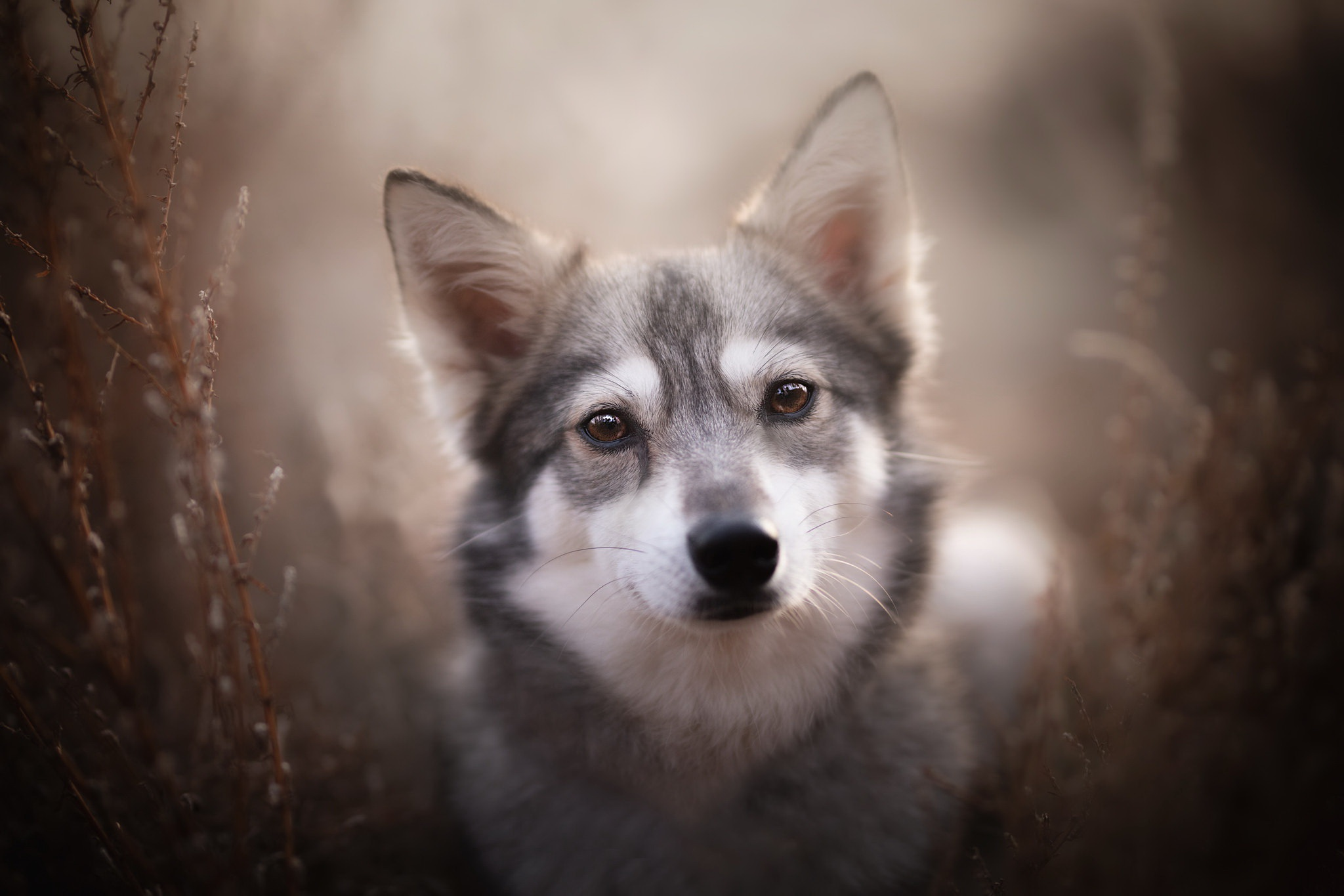 Dog Pet Puppy Baby Animal 2048x1365