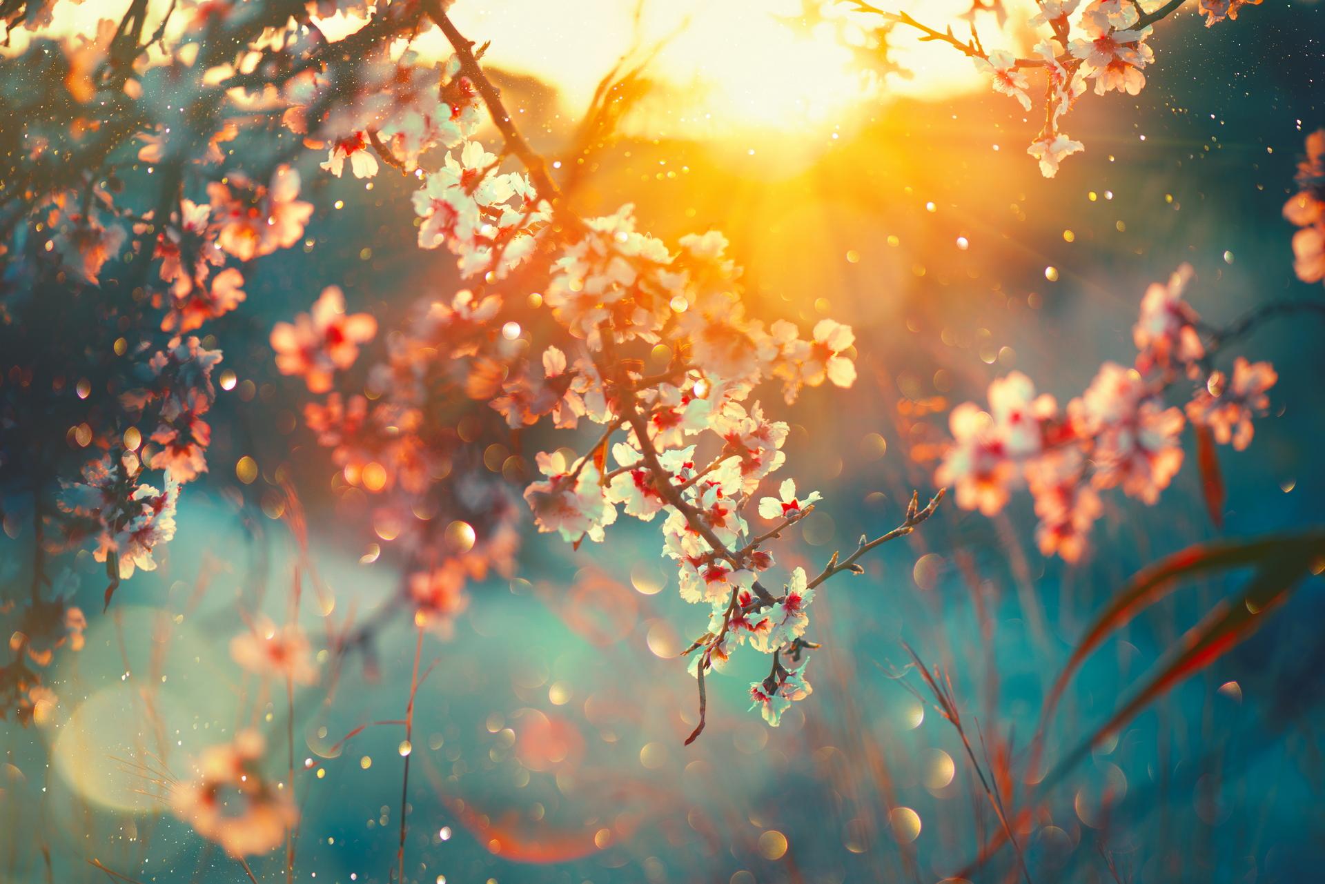 Earth Blossom 1920x1281