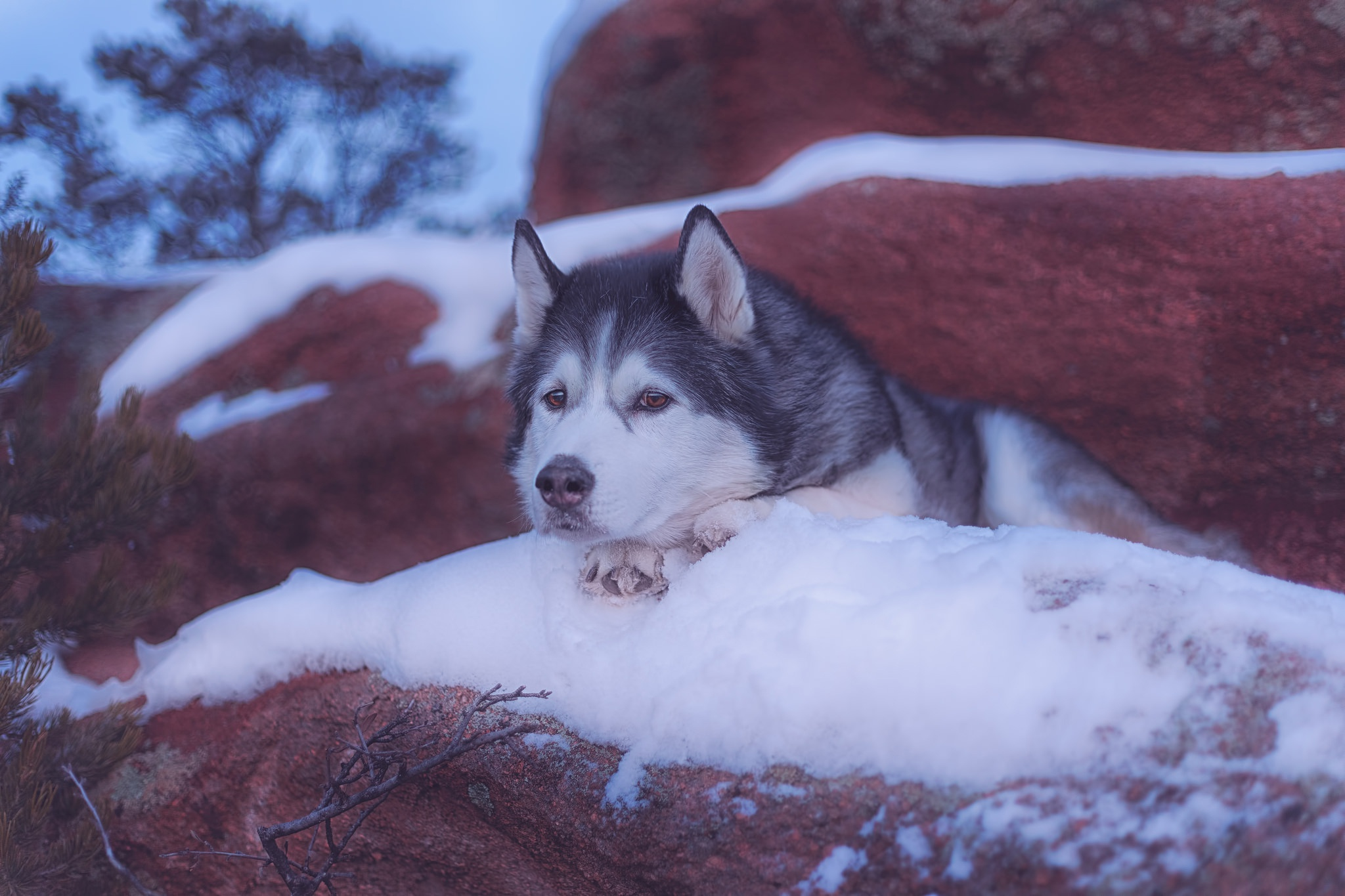 Dog Pet Snow Rock Winter 2048x1365