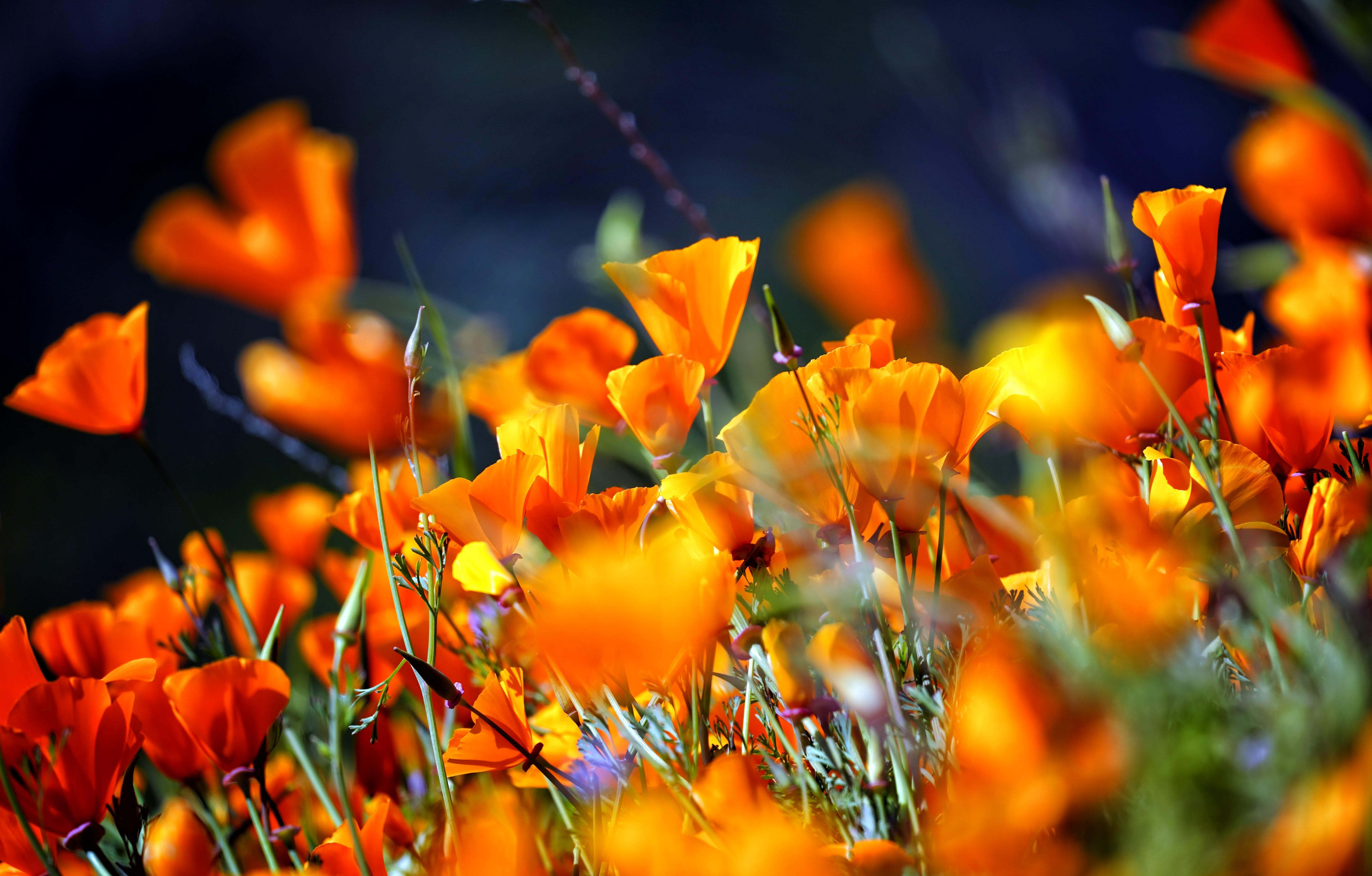 Flower Orange Flower Nature Close Up 5886x3759